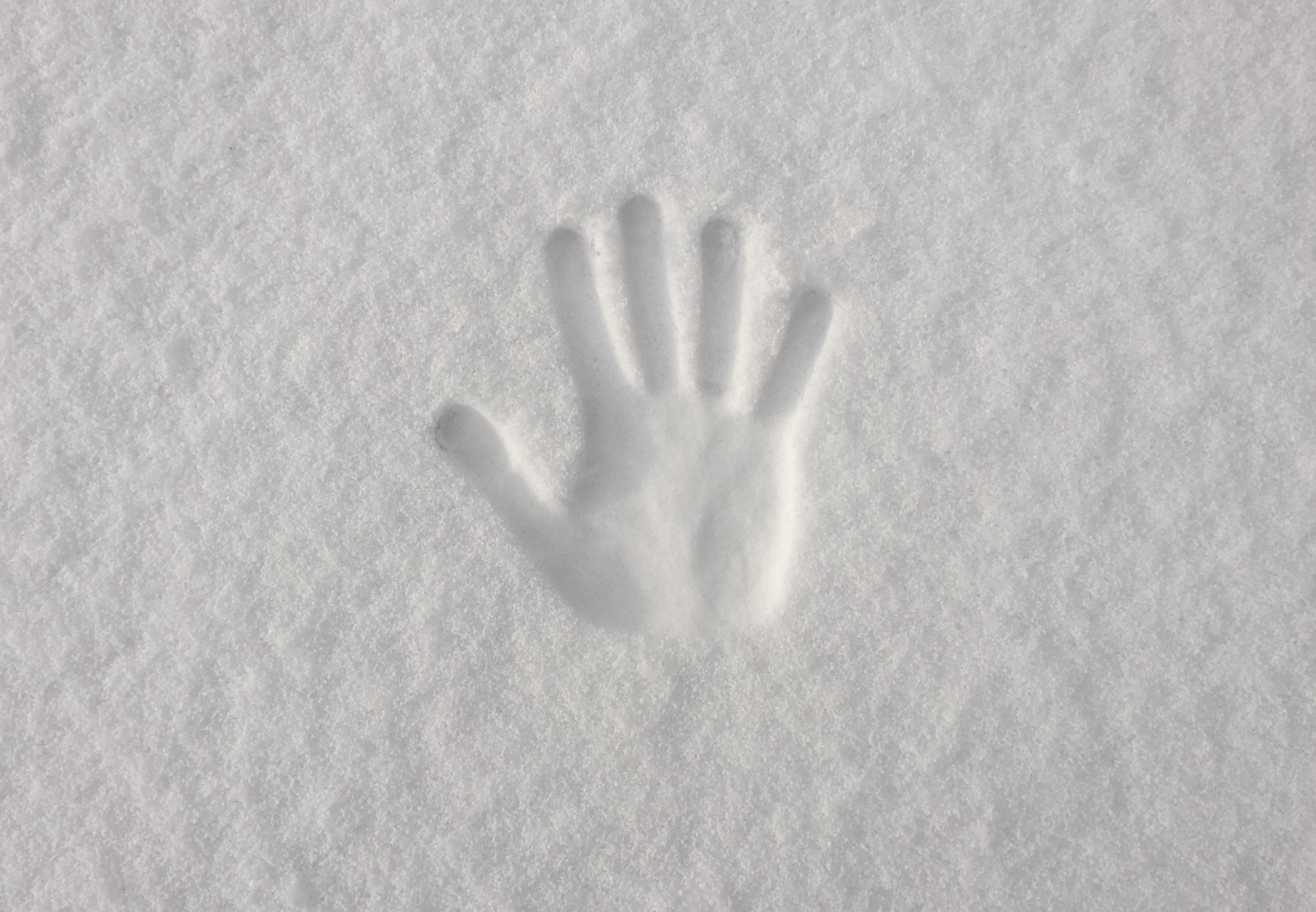 Fotos Gratis Mano Nieve Invierno Ala Blanco Escarcha Dedo