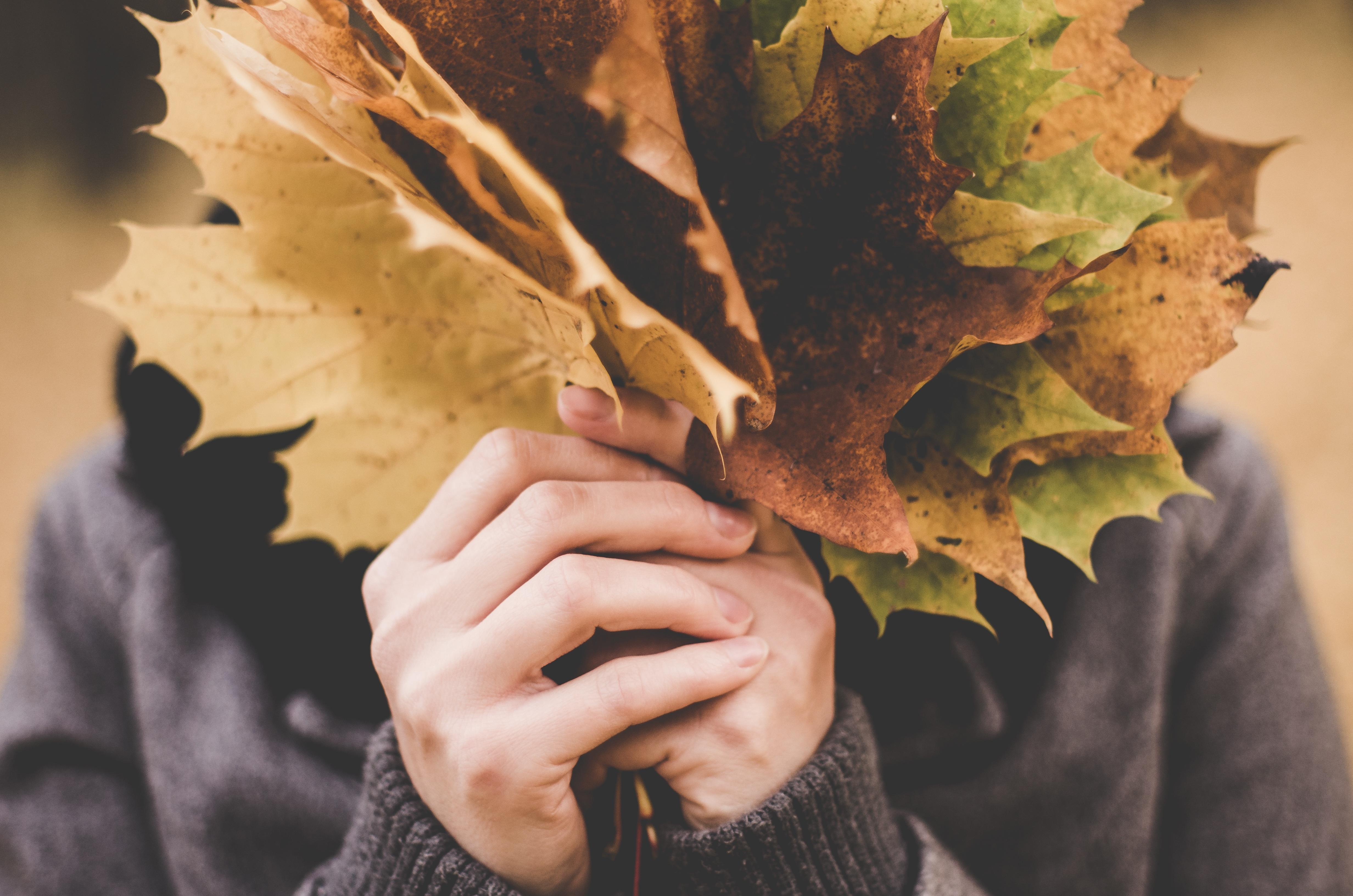 Gambar Tangan Pohon Cabang Orang Menanam Jatuh Bunga Musim