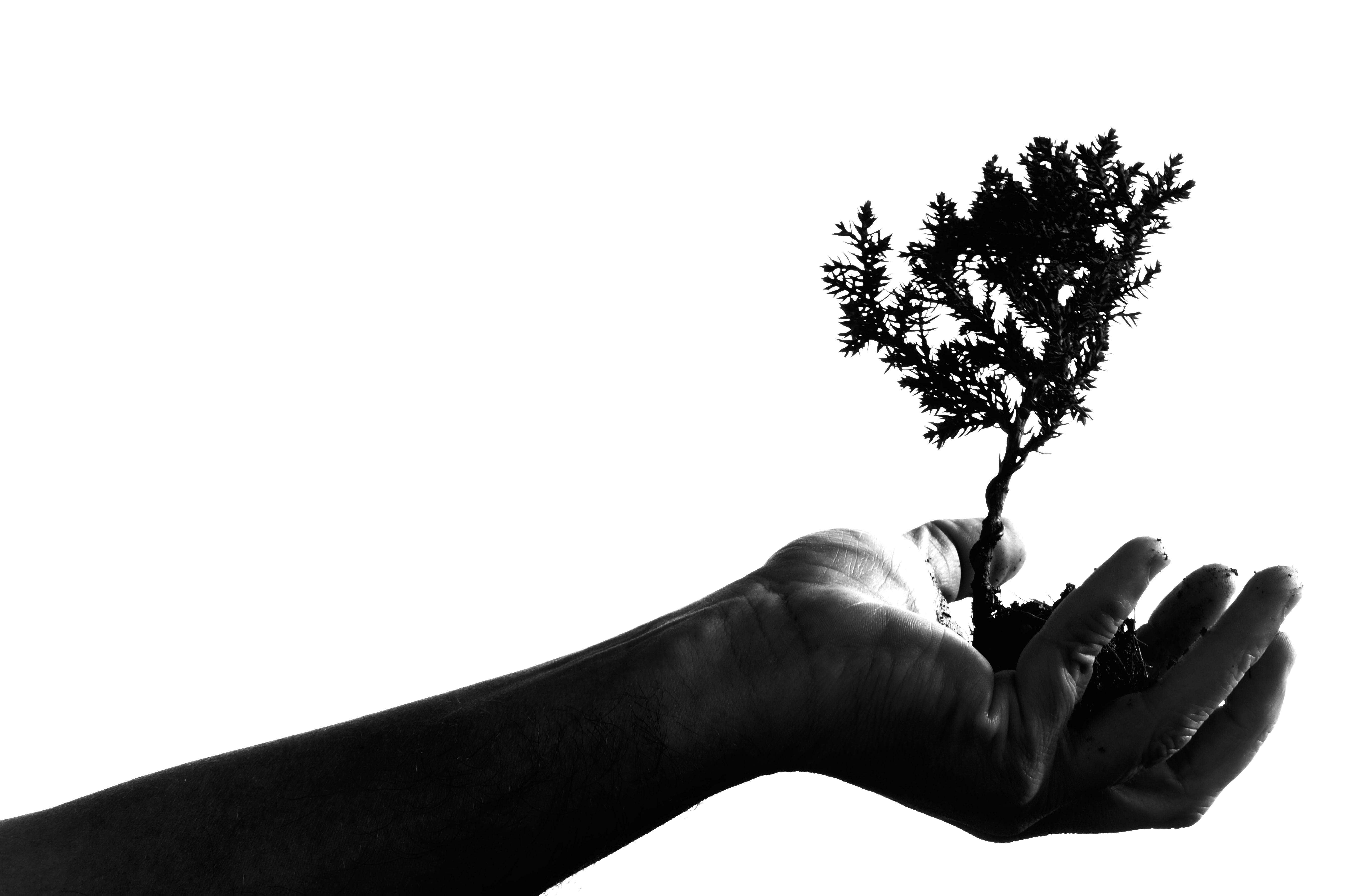 Fotos Gratis : Mano, árbol, Rama, Silueta, En Blanco Y
