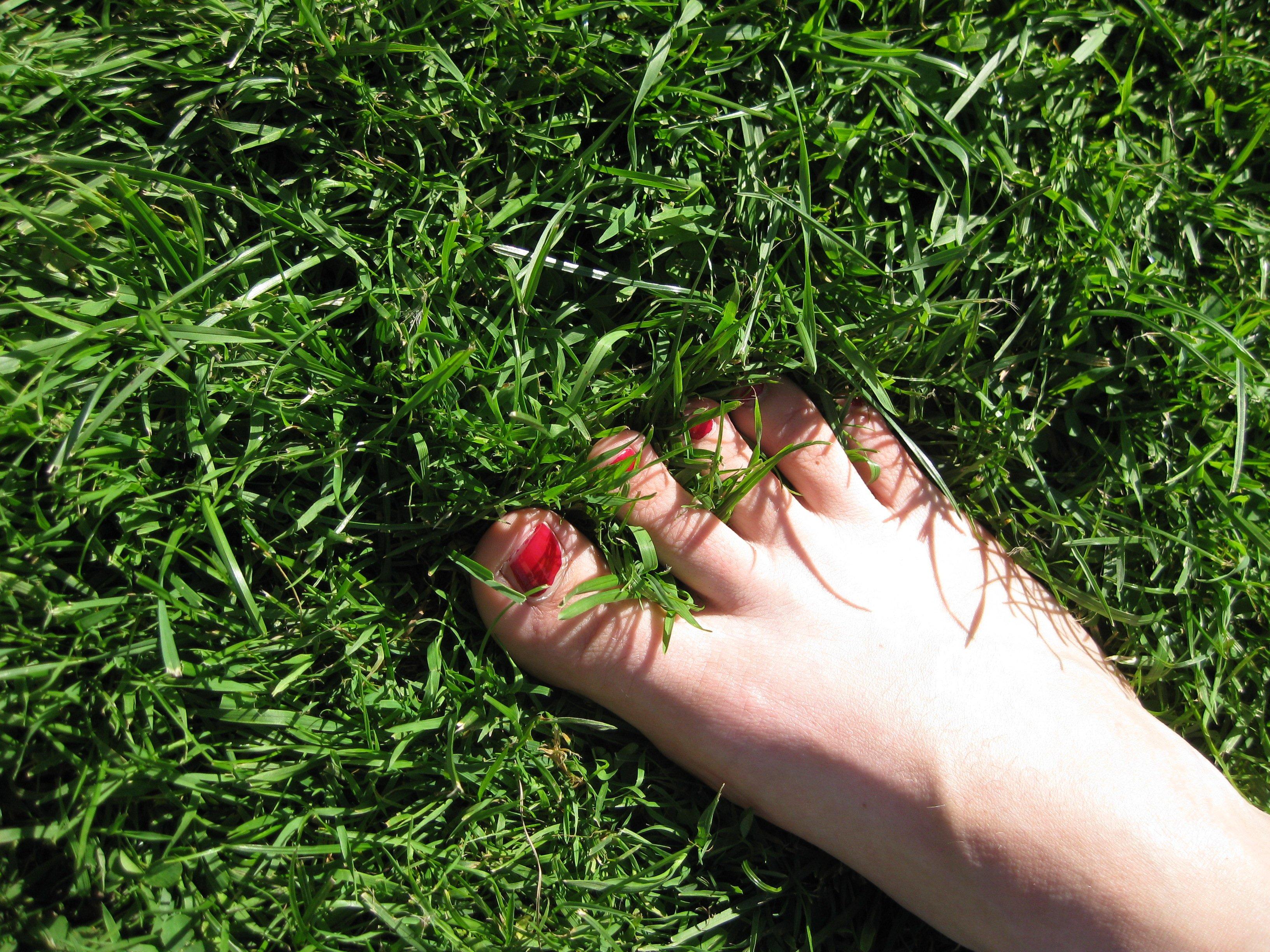 Fotos gratis : mano, árbol, césped, planta, prado, hoja, flor ...