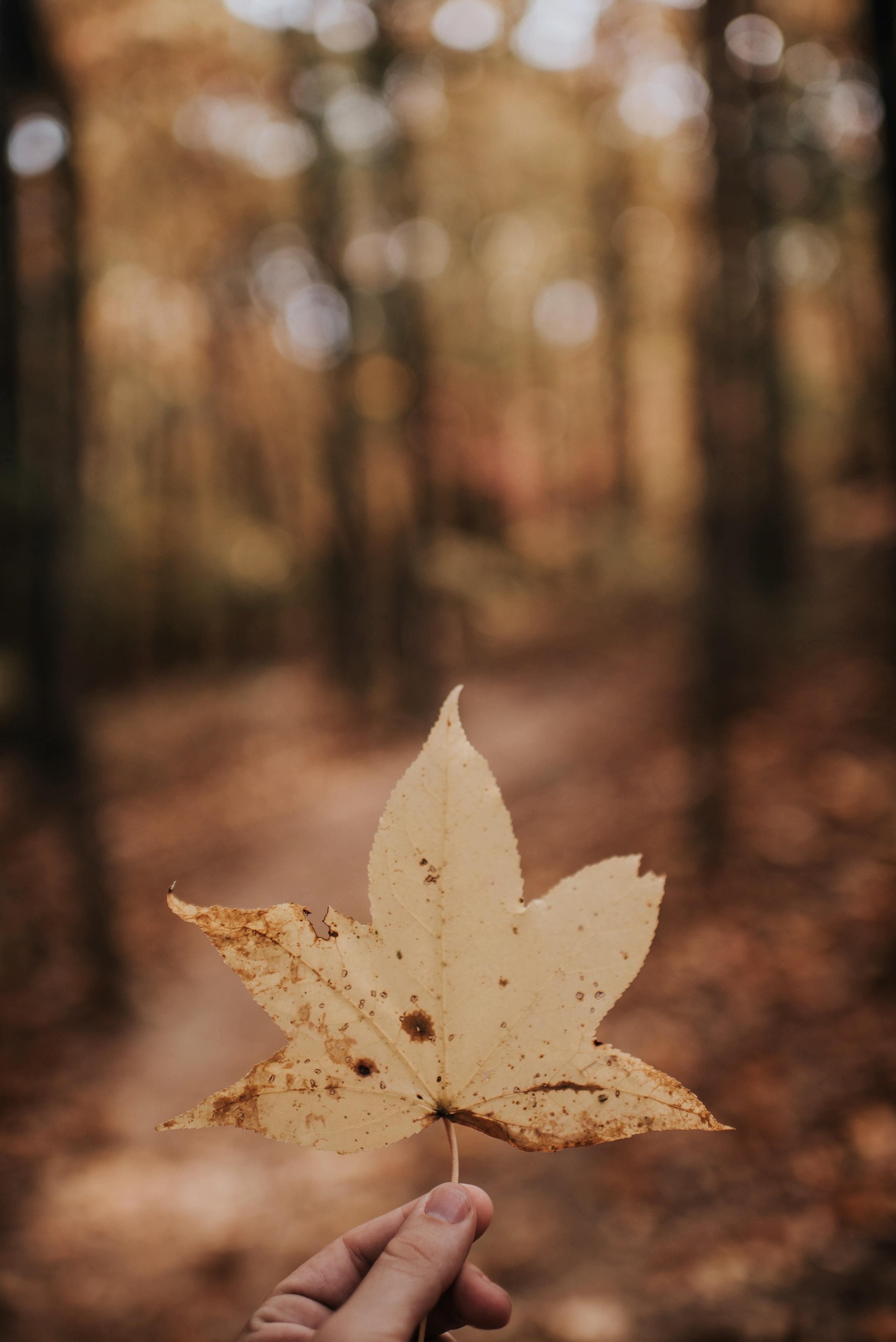 Gambar Tangan Pohon Alam Cabang Musim Dingin Cahaya Menanam