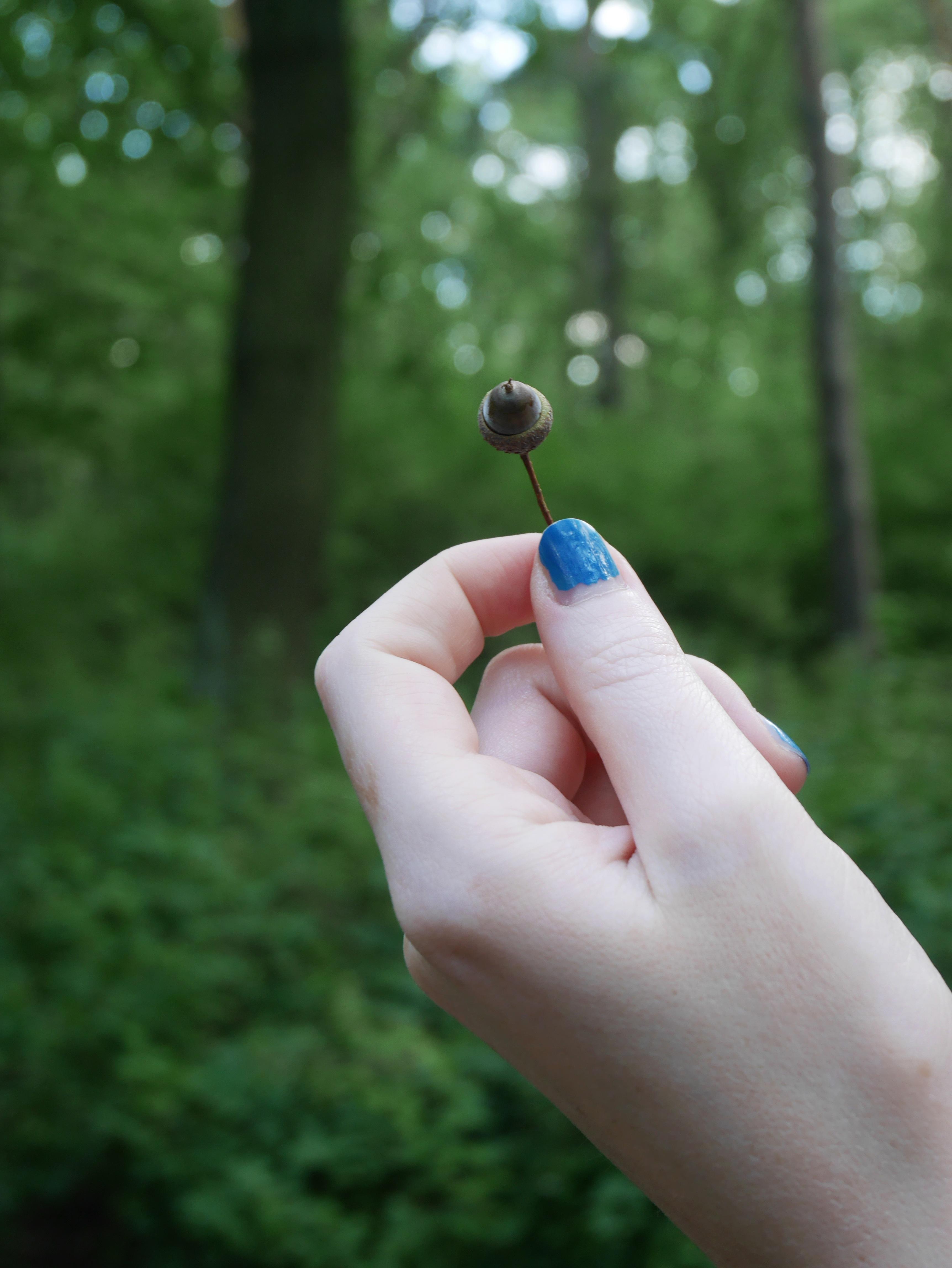 Fotos gratis : mano, árbol, naturaleza, bosque, césped, rama, planta ...