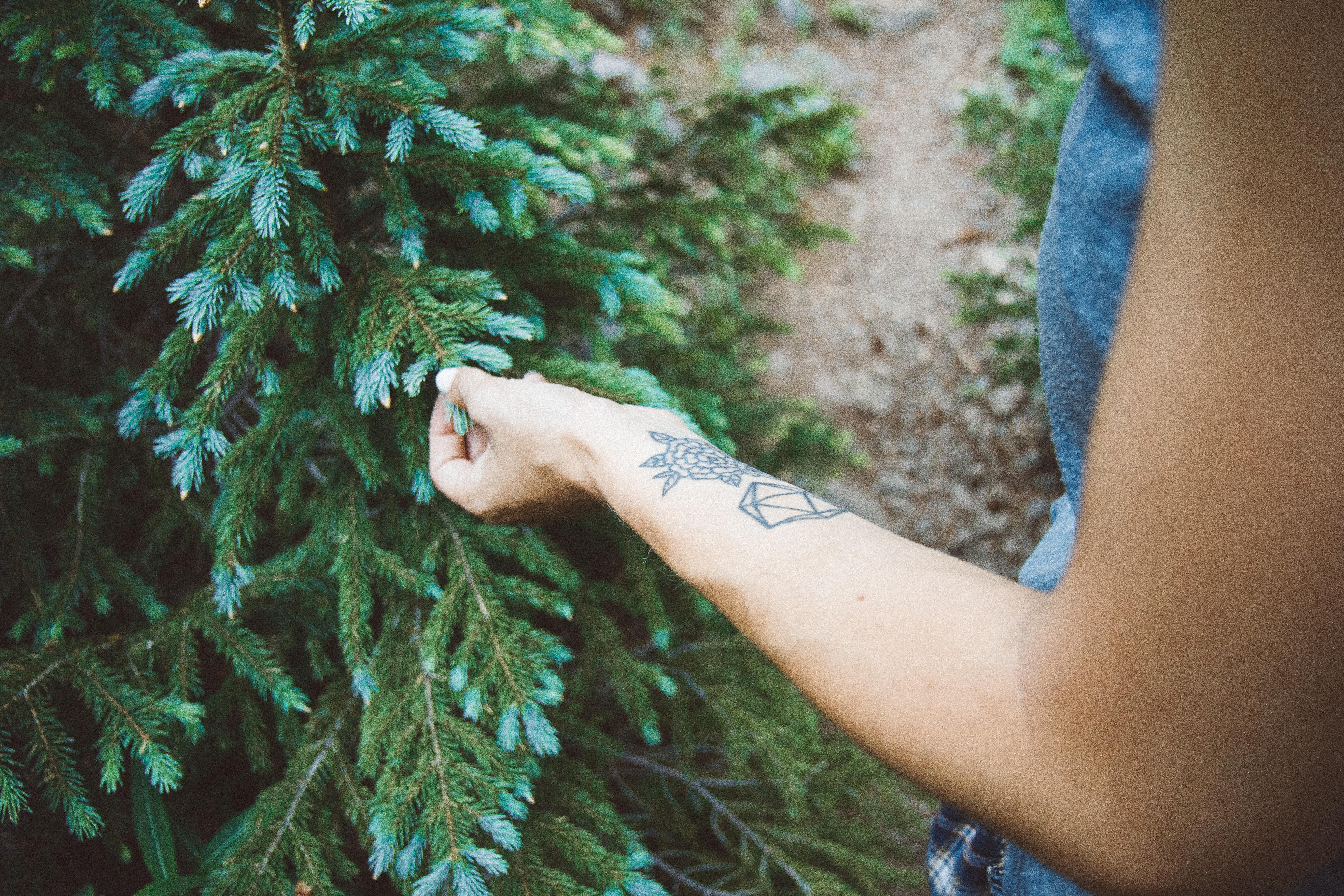 Fotos gratis : mano, árbol, naturaleza, césped, rama, planta, niña ...