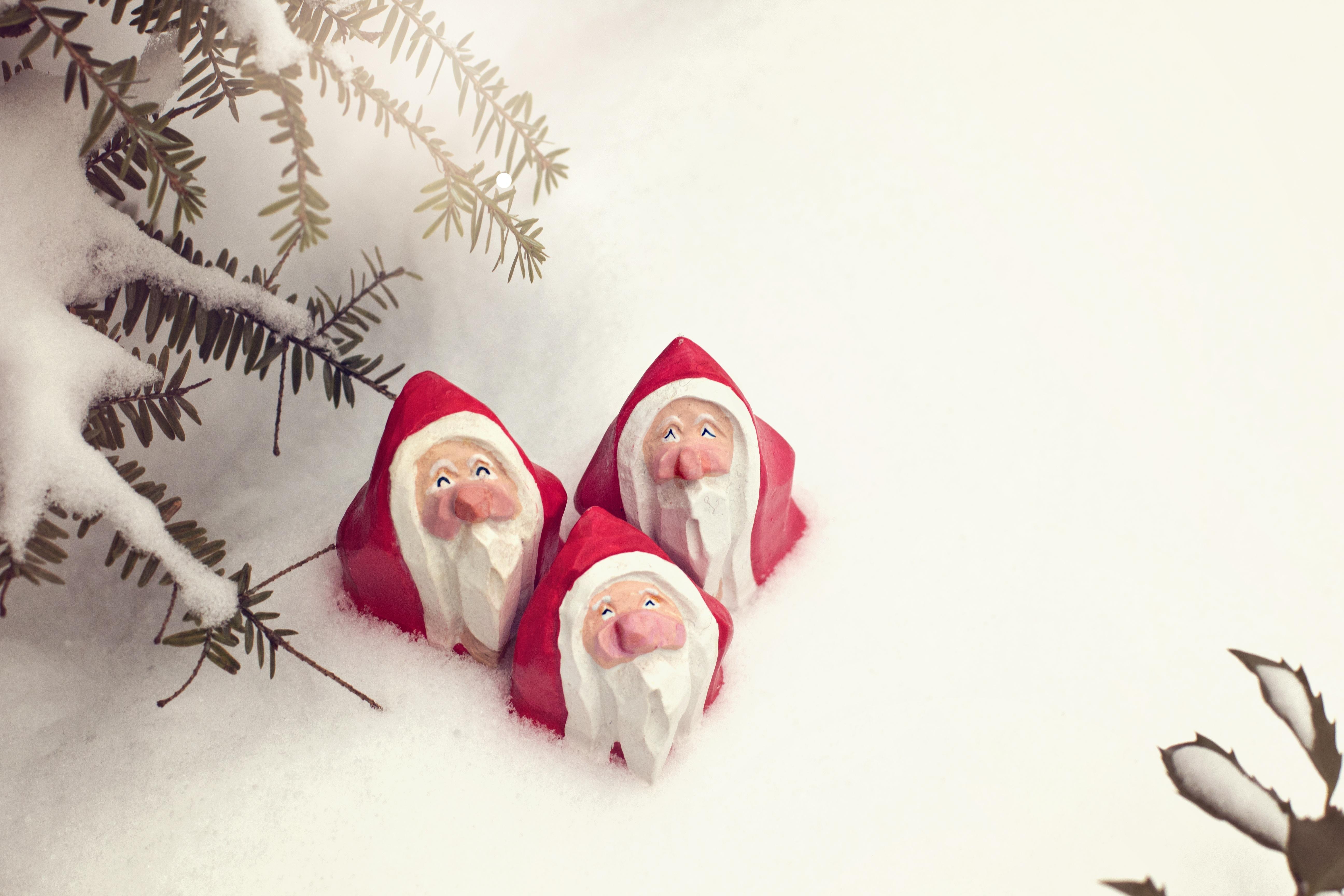 Fotos Gratis Mano árbol Nieve Invierno Blanco Pino
