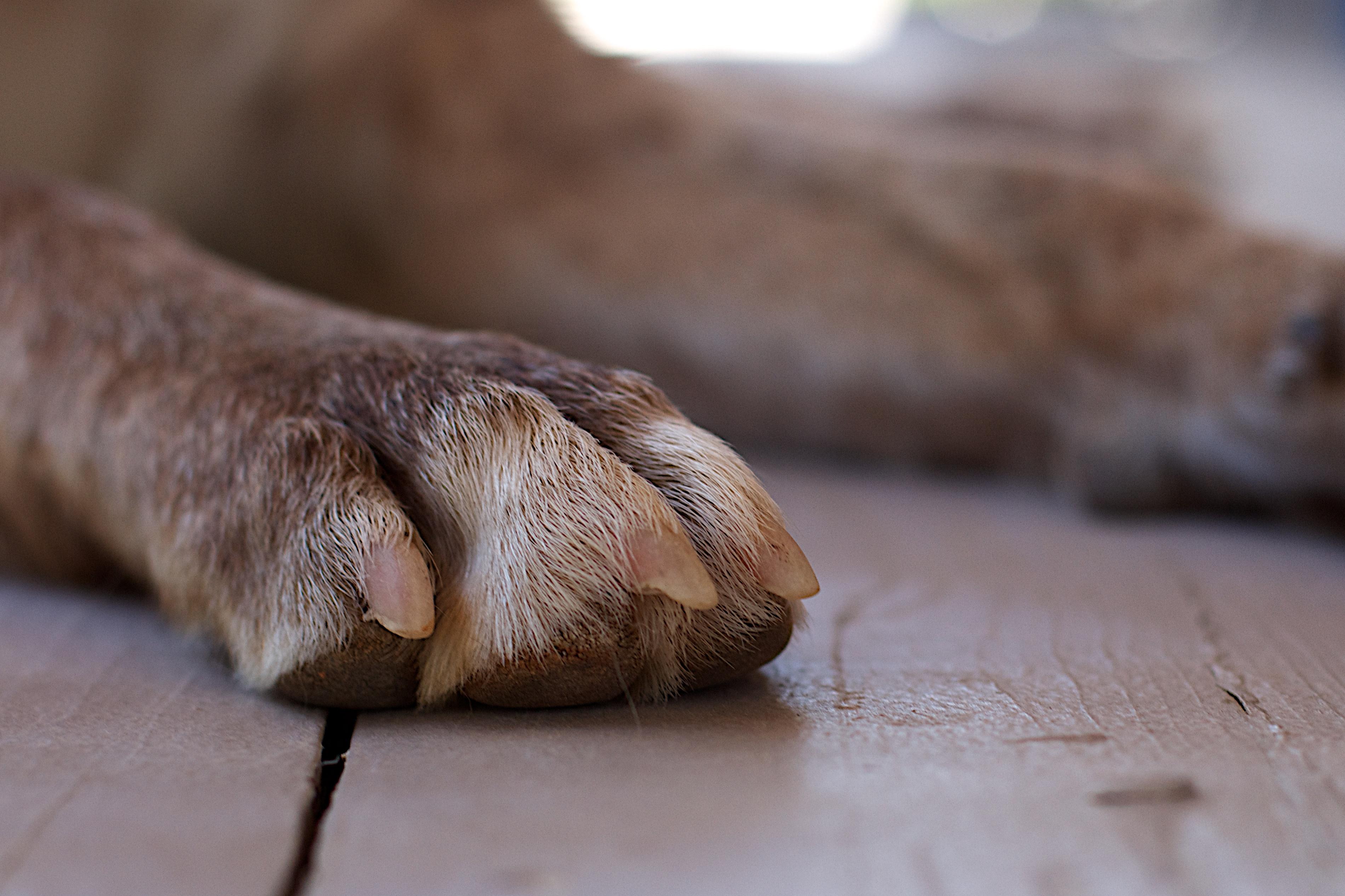 фото лапки собаки те, кто