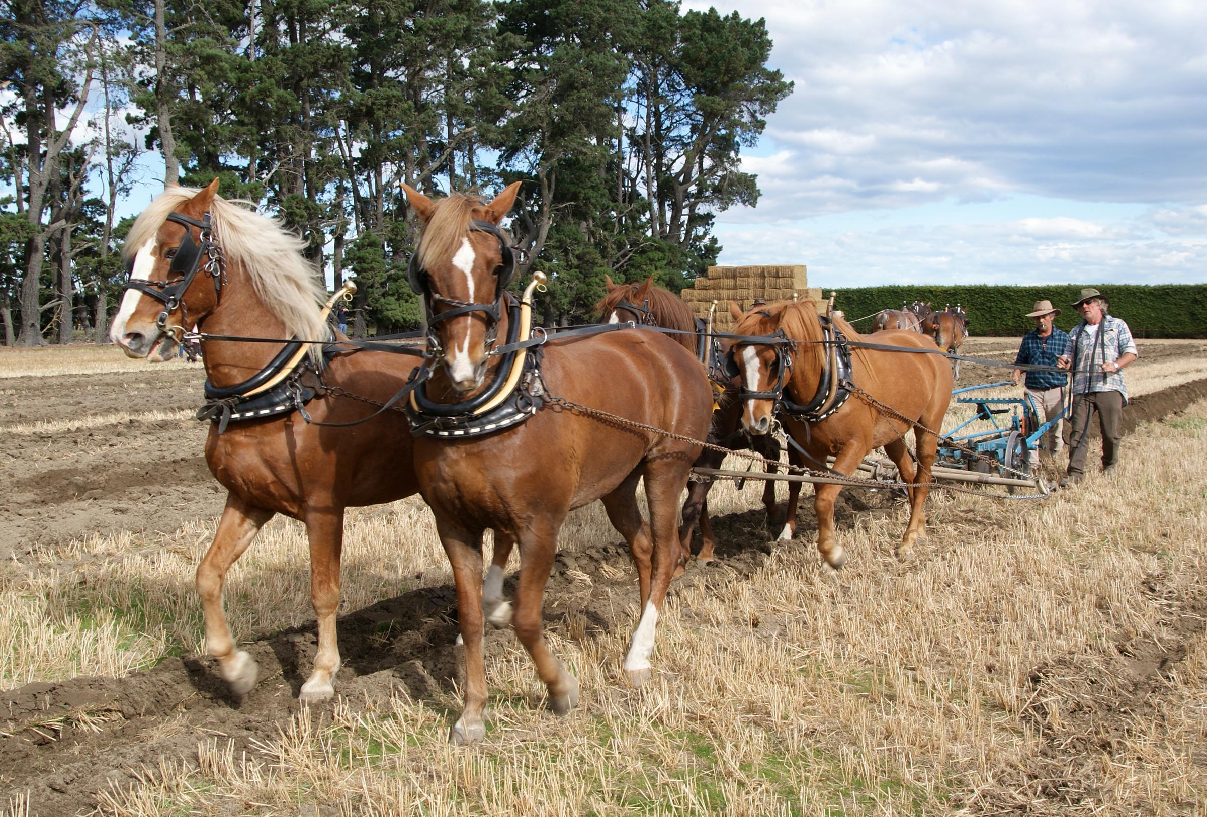 Hevosen Kuljetus