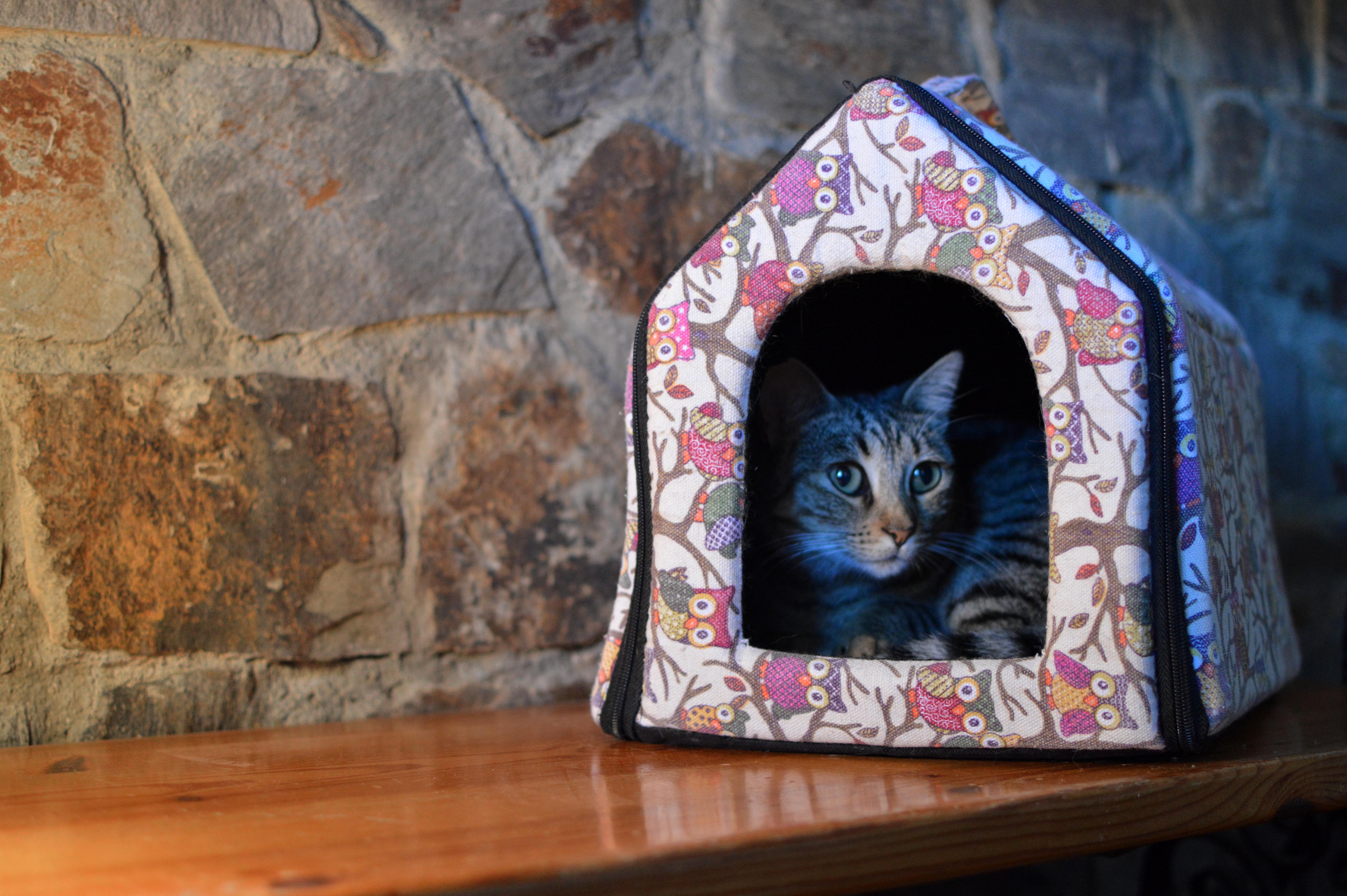 Cat House Art