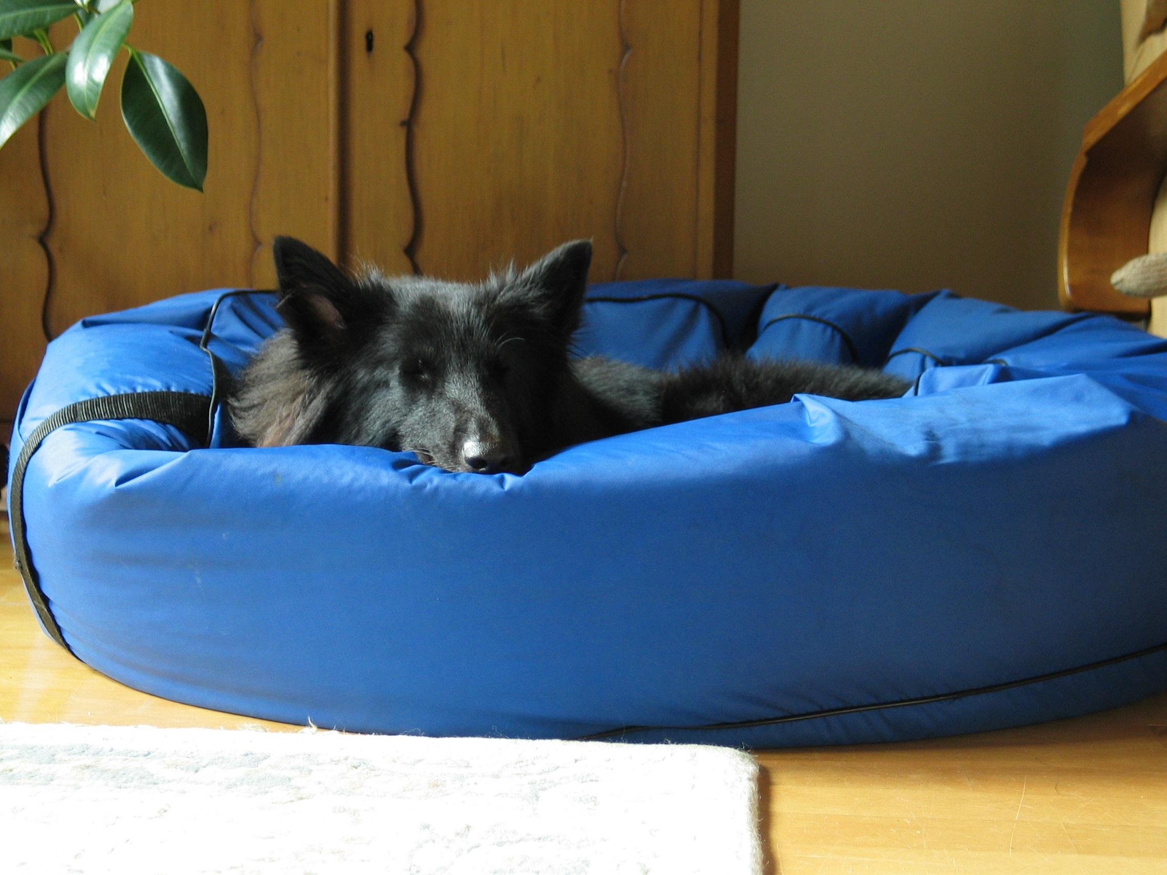 Fotos gratis : casa, perro, animal, linda, mascota, gato, azul ...