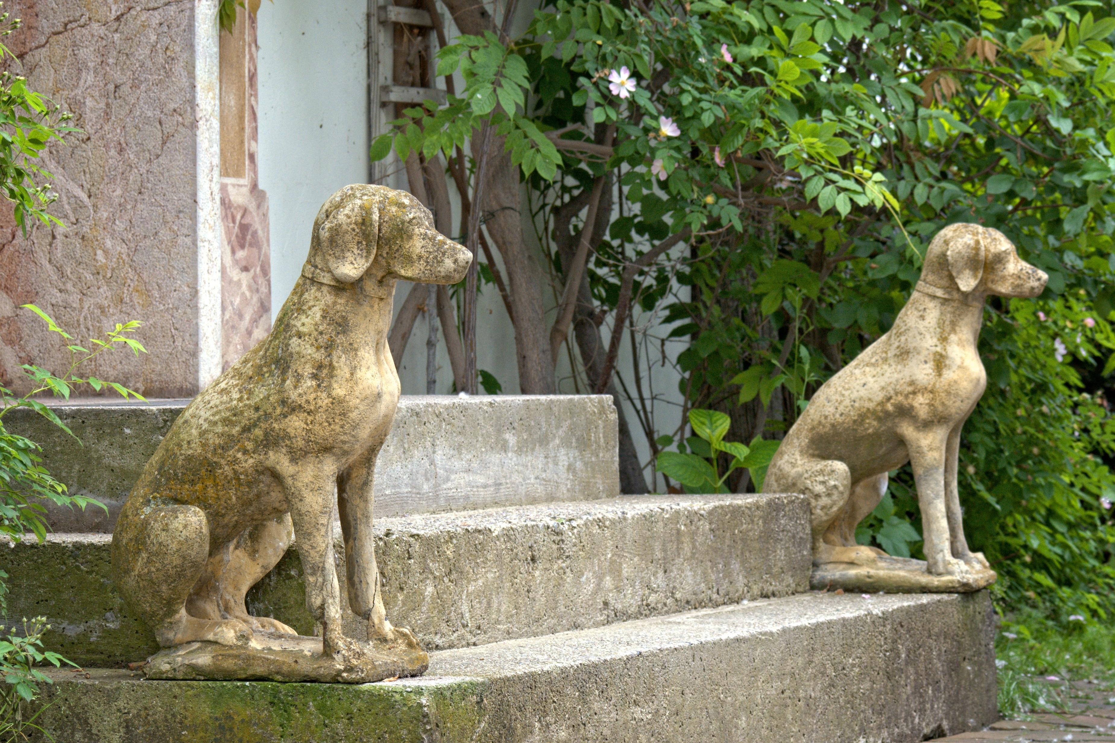 c70ad78d3bc60 maison chien zoo décoration mammifère jardin faune figue Déco sculpture  escaliers gardien contribution Entrée maison Escalier