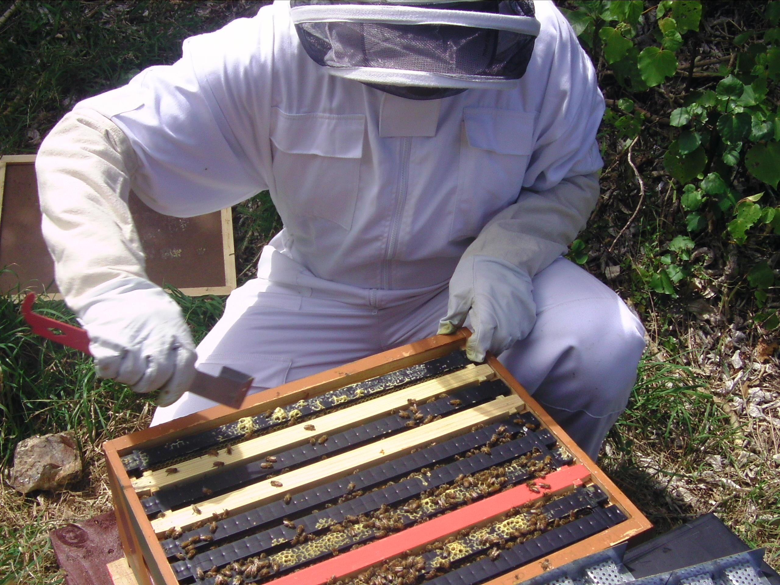 Fotos gratis : miel, insecto, marco, ropa, invertebrado, apicultor ...