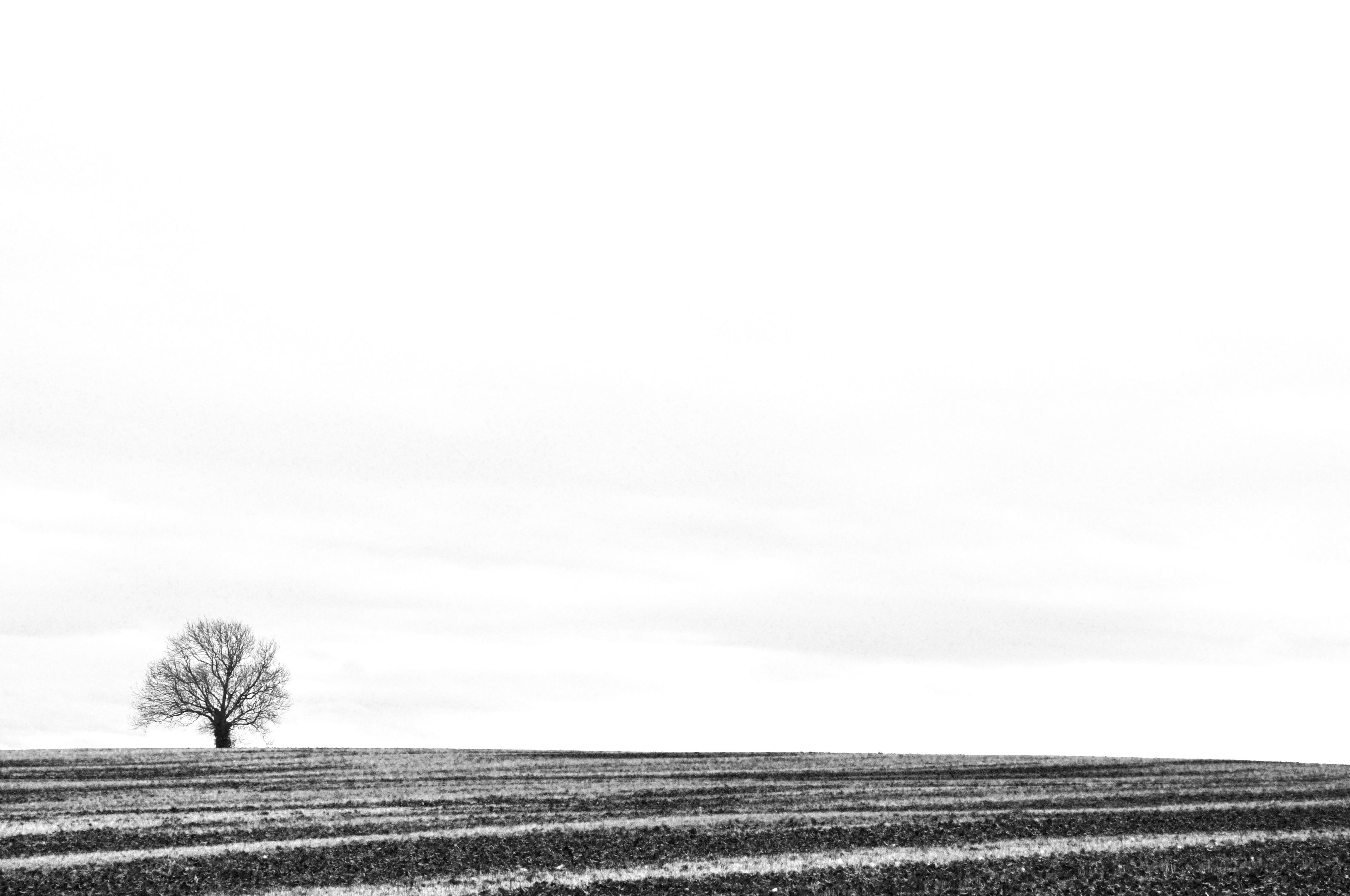 оттенками равнины картинки черно-белые несложно понять этим
