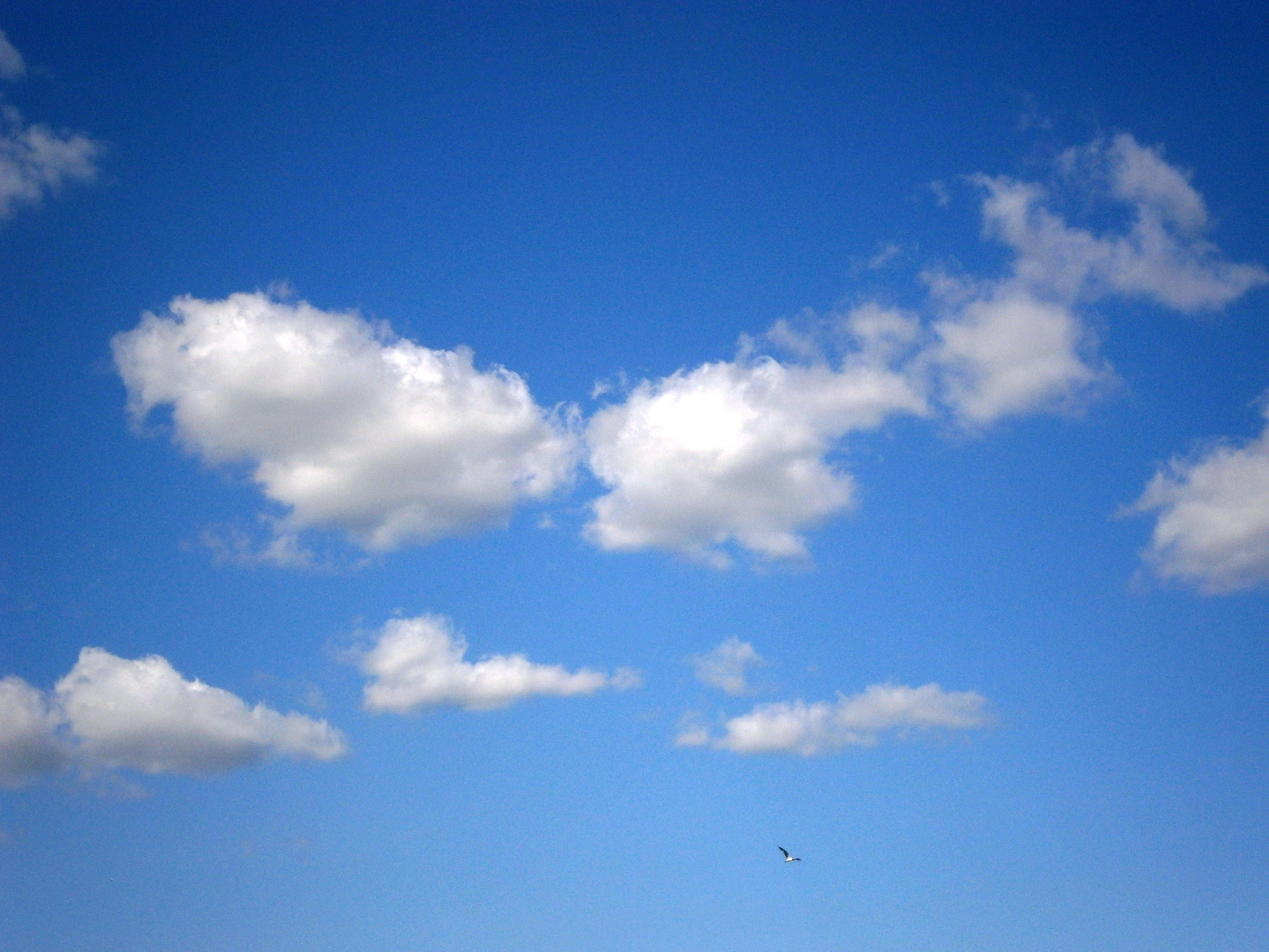 Kostenlose foto : Horizont, Wolke, Himmel, Weiß, Sonnenlicht ...