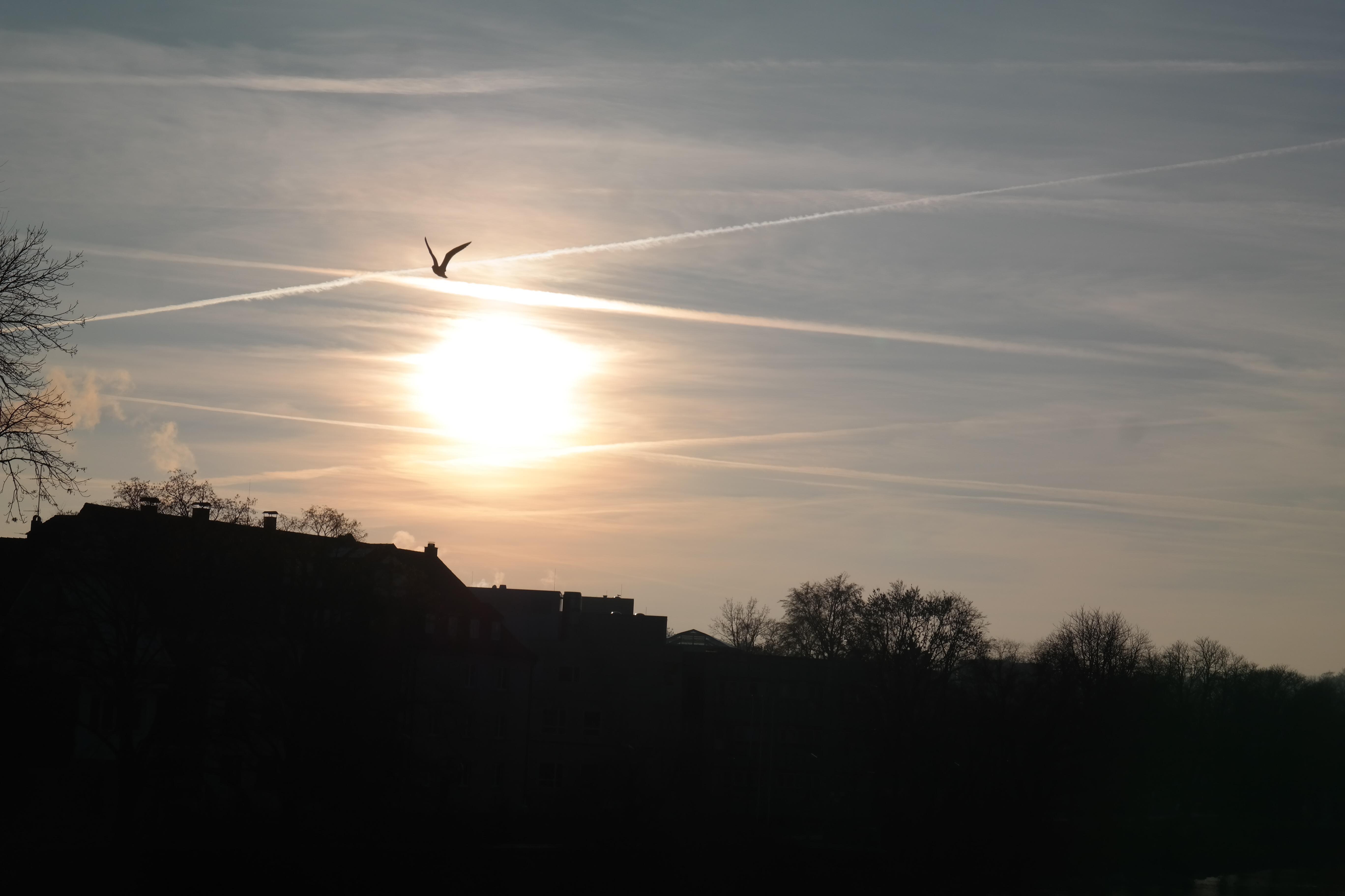 Free Images : horizon, light, cloud, sky, sun, sunrise ...