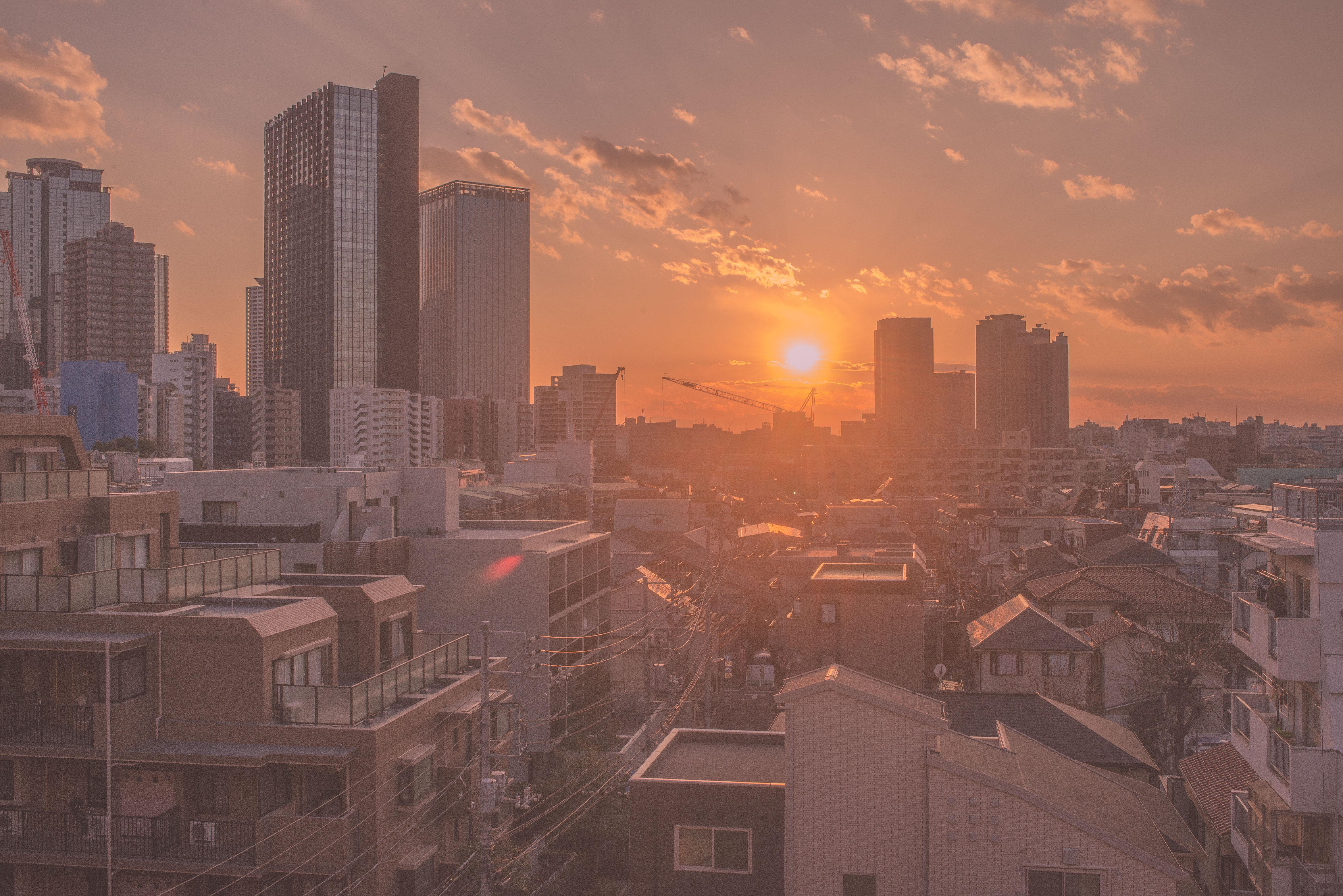 каталоге нашего фото японский город утро сорт среднепозднего