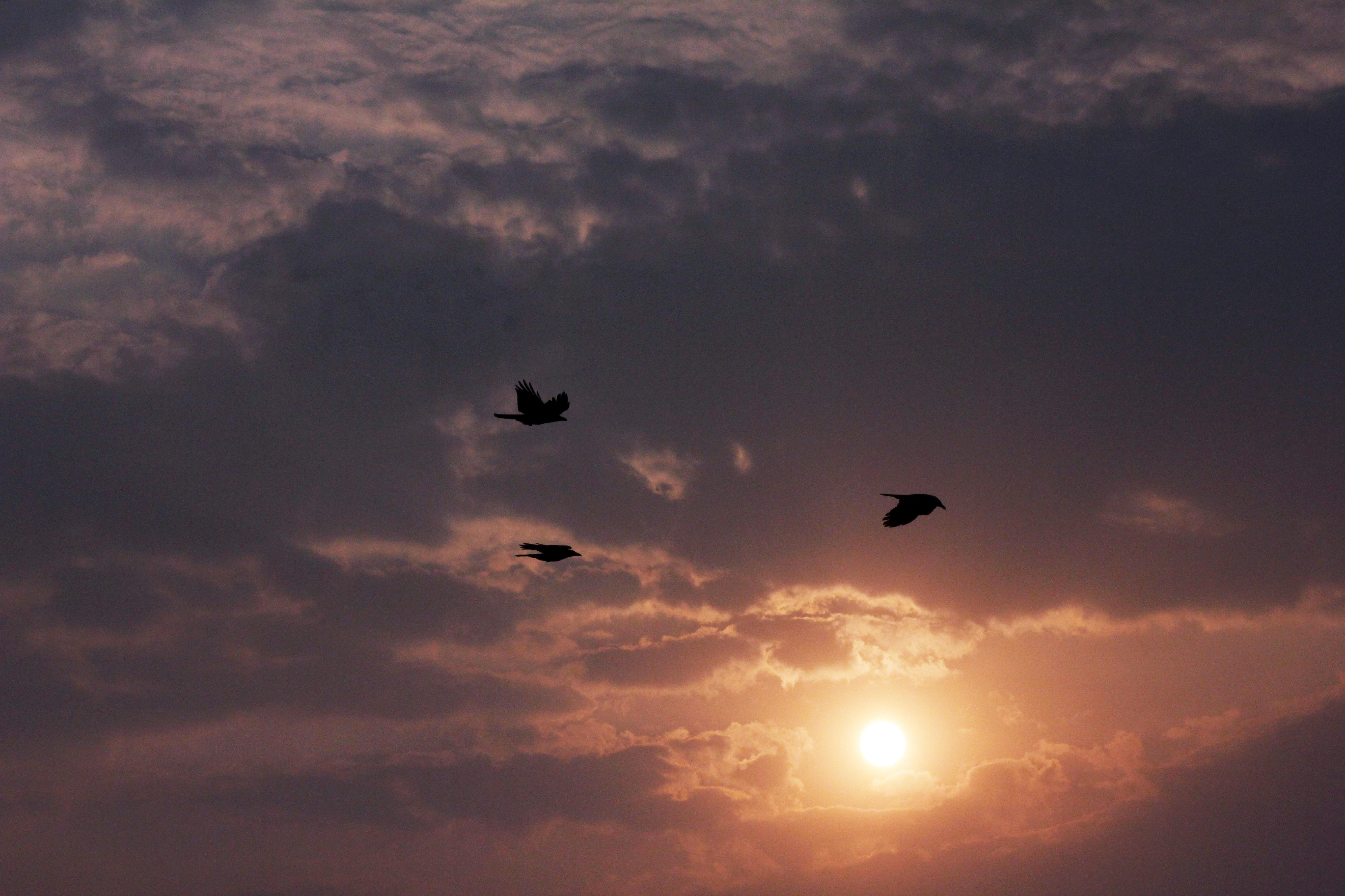 красивое фото облака птицы закат рассвет для квадратного