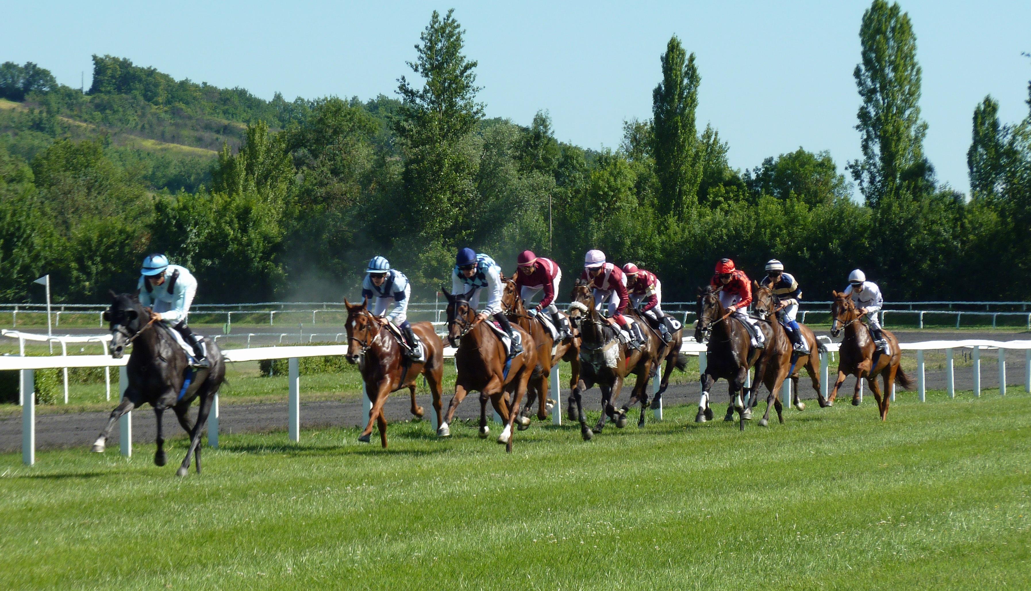 Horse Race Horses Sports Racing Jockey Bet Hippodrome Jockeys Castera Verduzan Pmu
