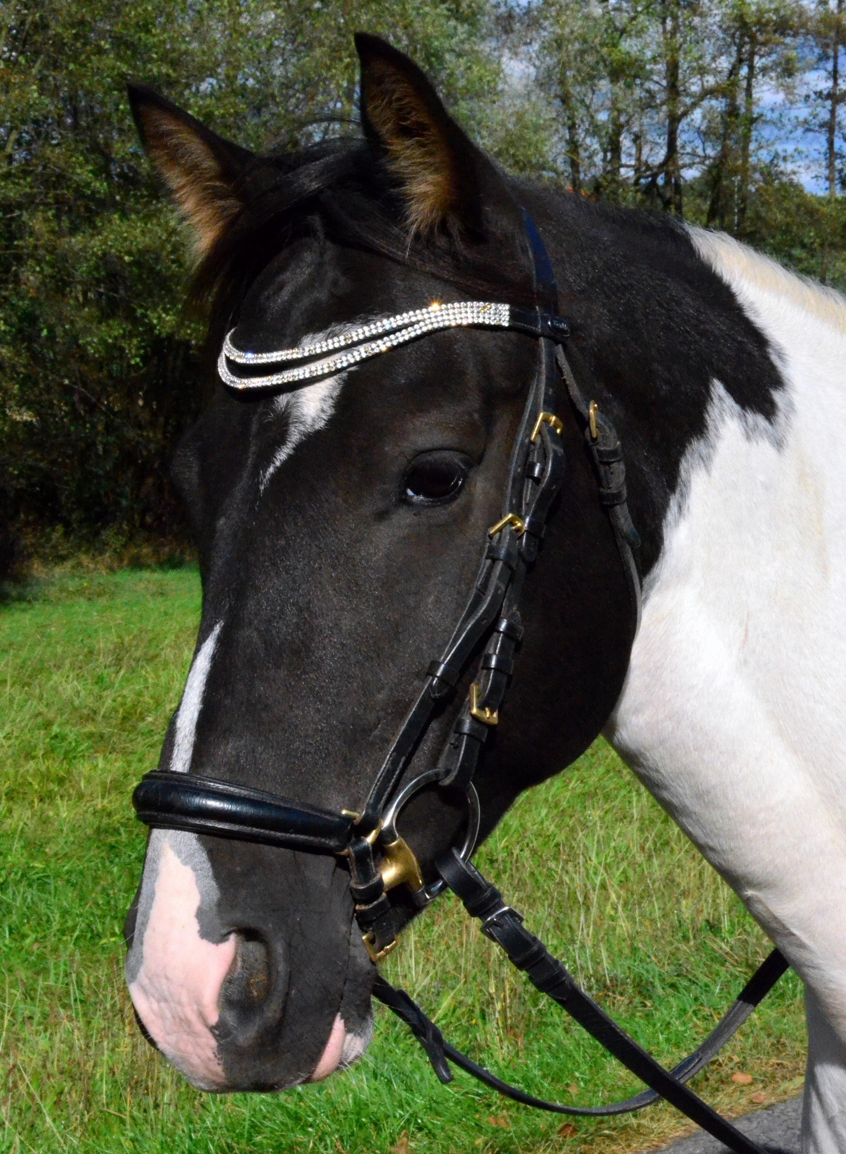 Ilmaisia Kuvia : ohjat, ori, harja, suitset, poni, tamma, hevosen pään, riimu, kuormajuhta ...