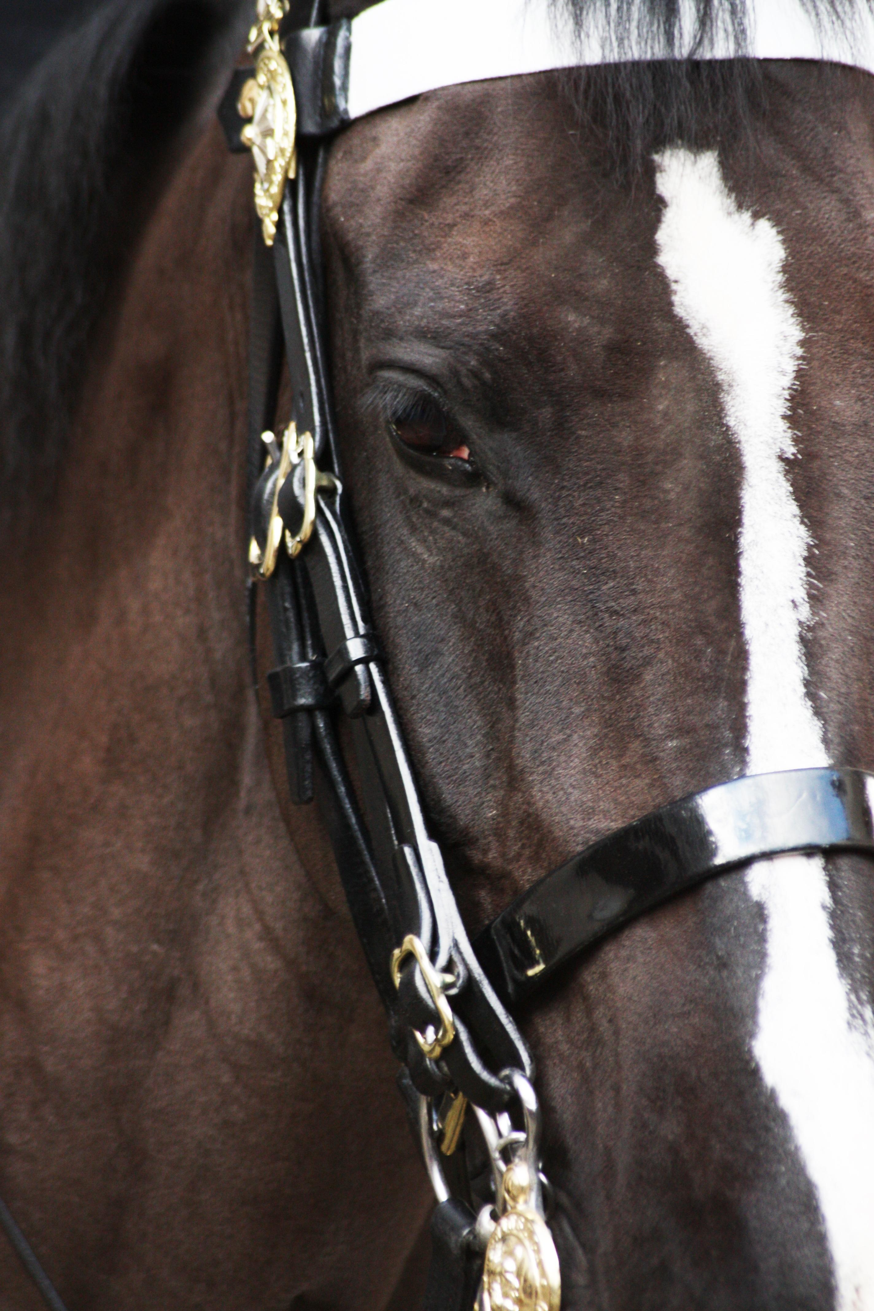 Hevosen Valjaat