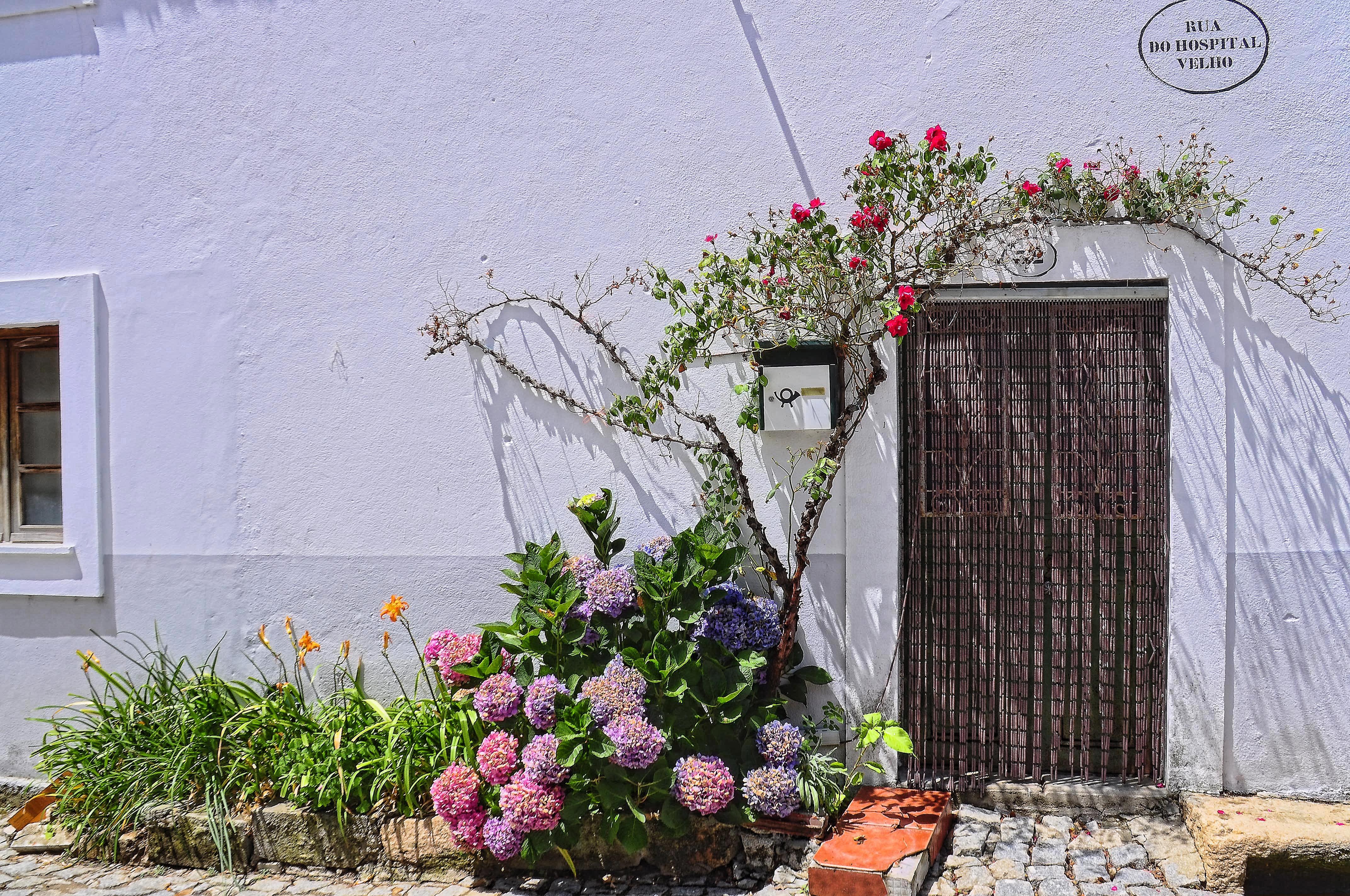 Цветы по стене дома