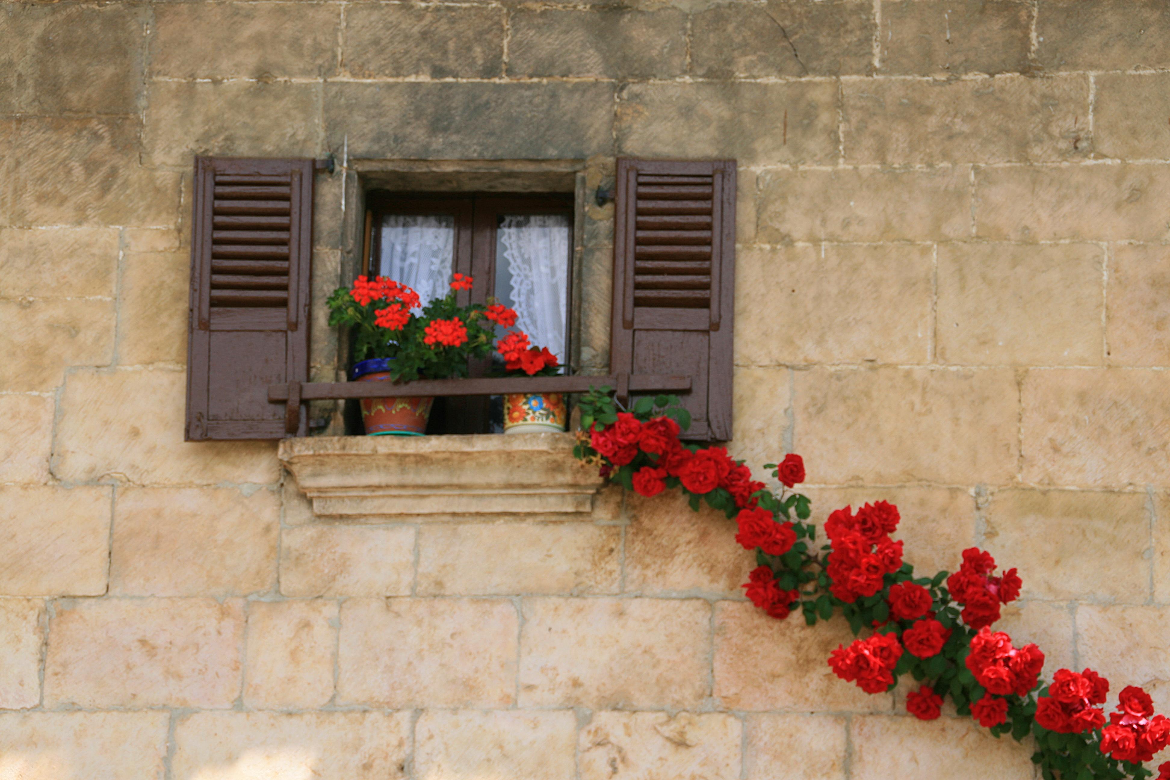 Картинки : дом, цветок, окно, стена, балкон, красный, фасад,.