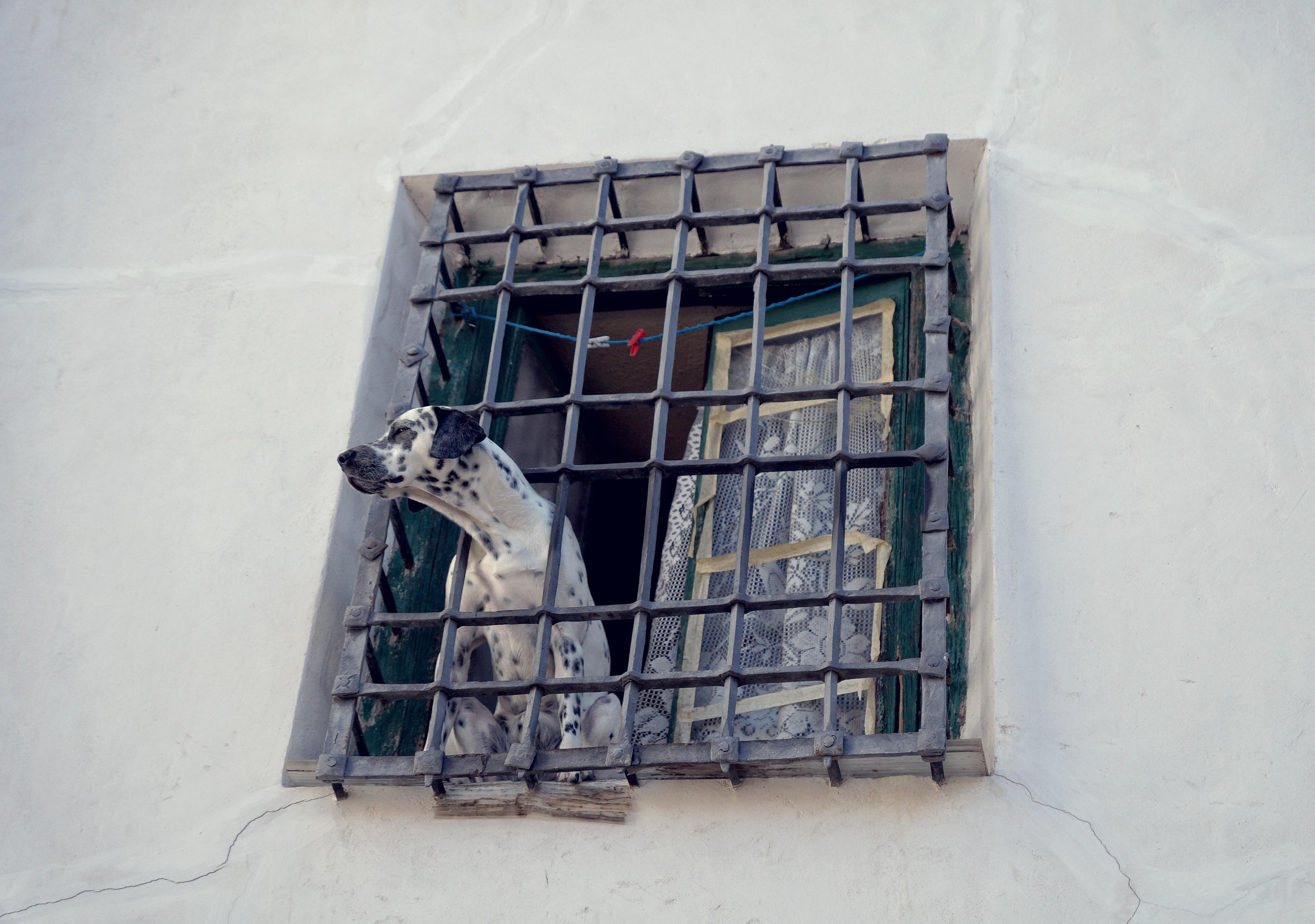 Images gratuites maison fen tre vieux chien mur for Fenetre qui rentre dans le mur