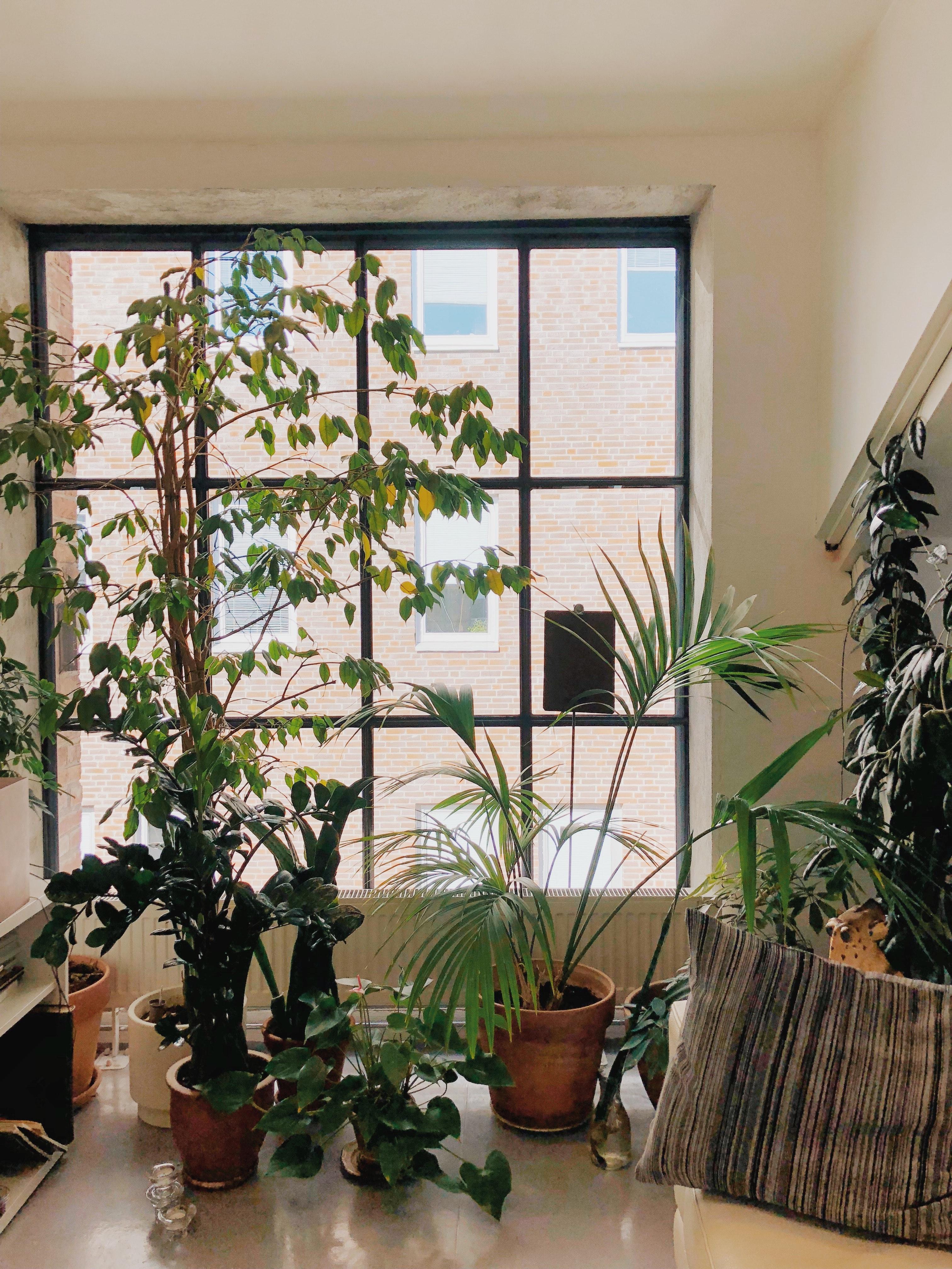 Kostenlose foto  Zimmerpflanze, Zimmer, Innenarchitektur ...