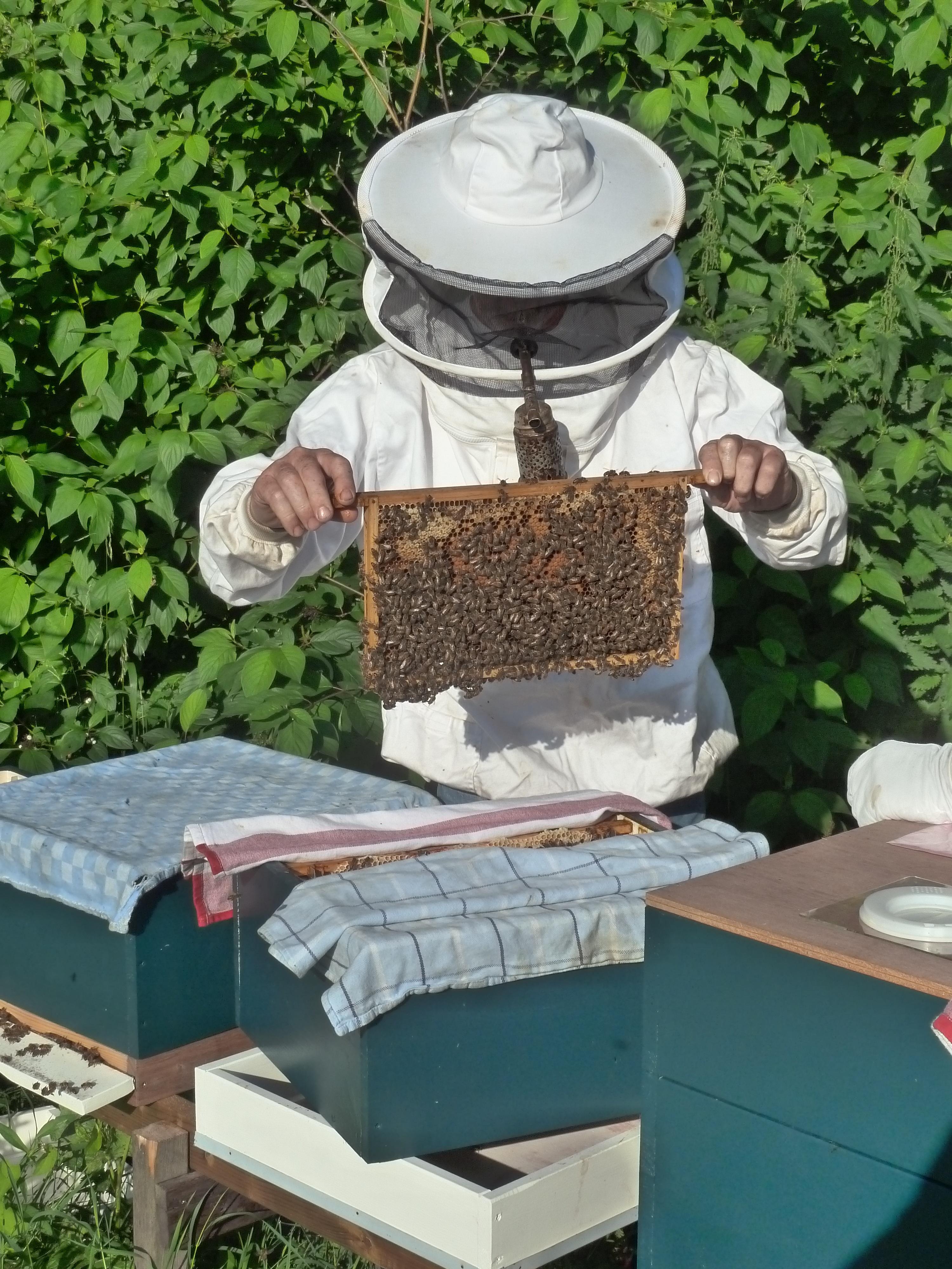 пчеловод улей пчелы картинки