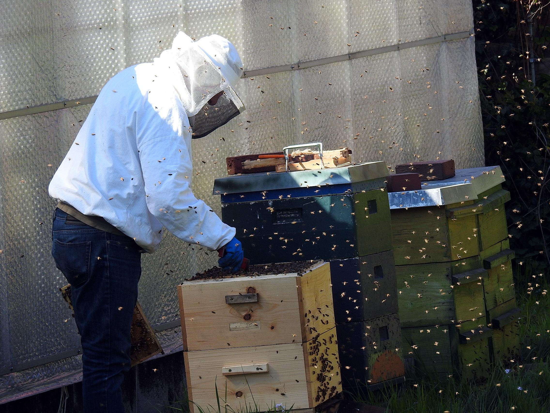 apiculteur traduction