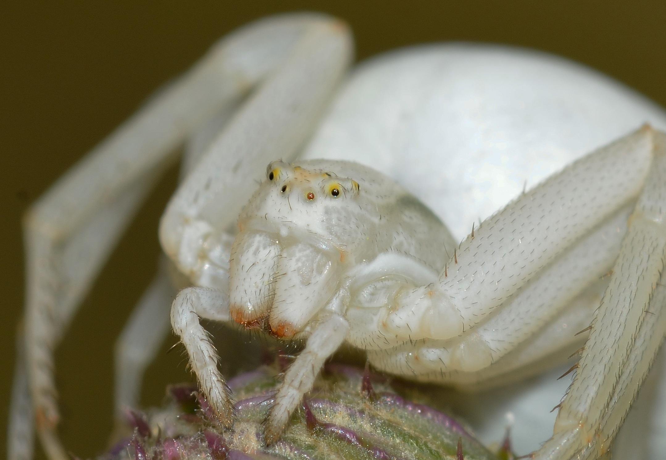 картинки белого паука чему сниться открытка