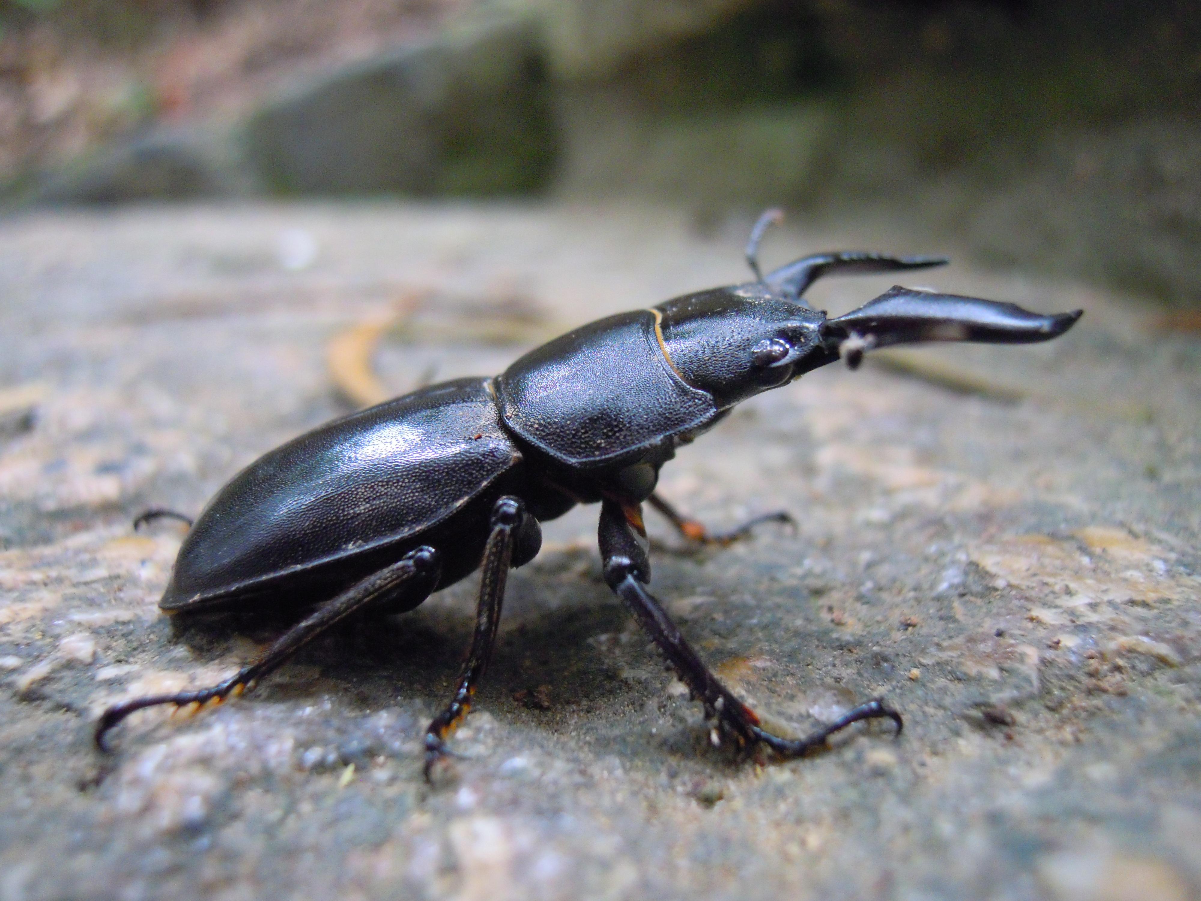 War Beetles