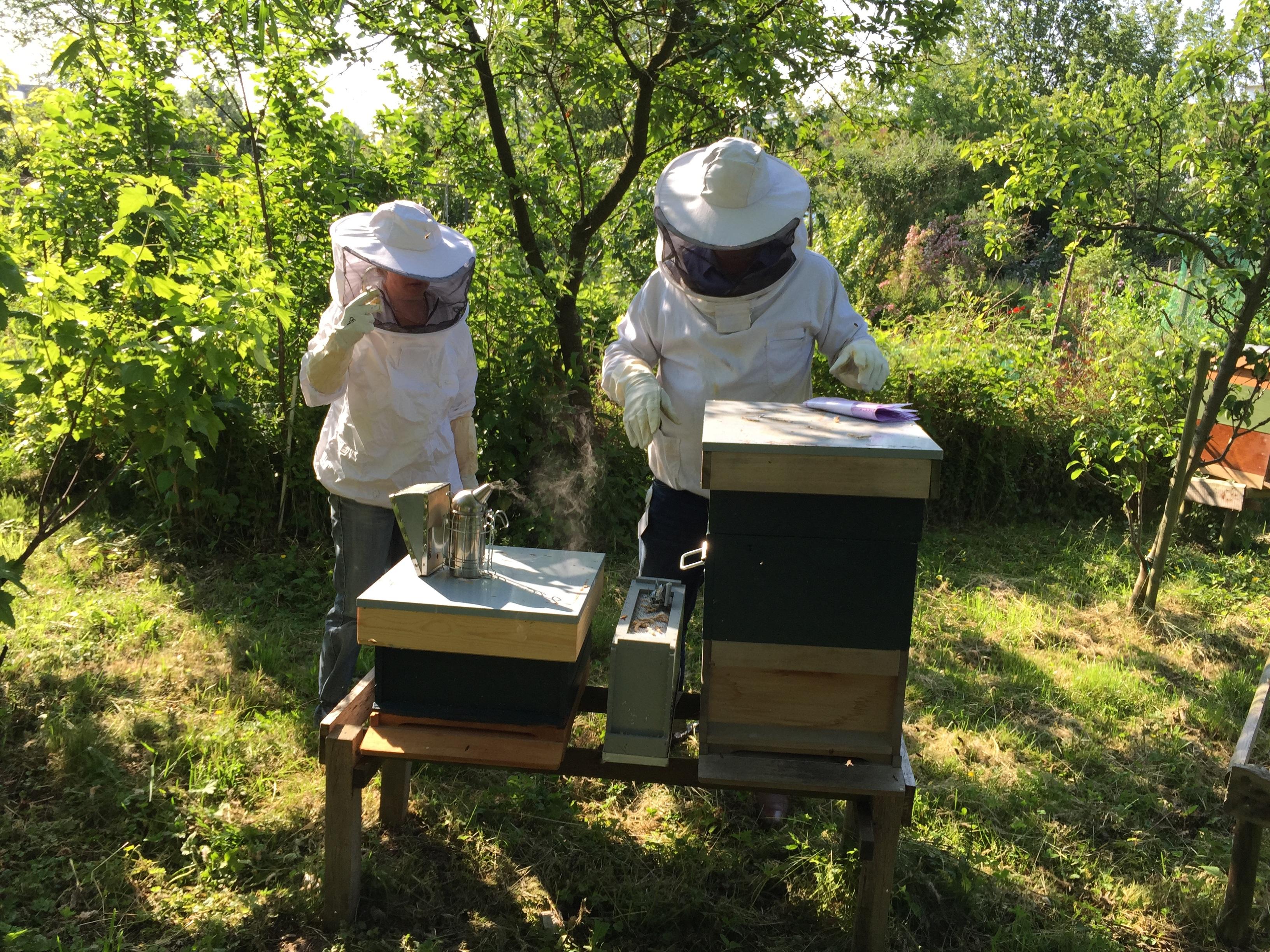 Fotos gratis : insecto, invertebrado, apicultor, colmena, abeja ...