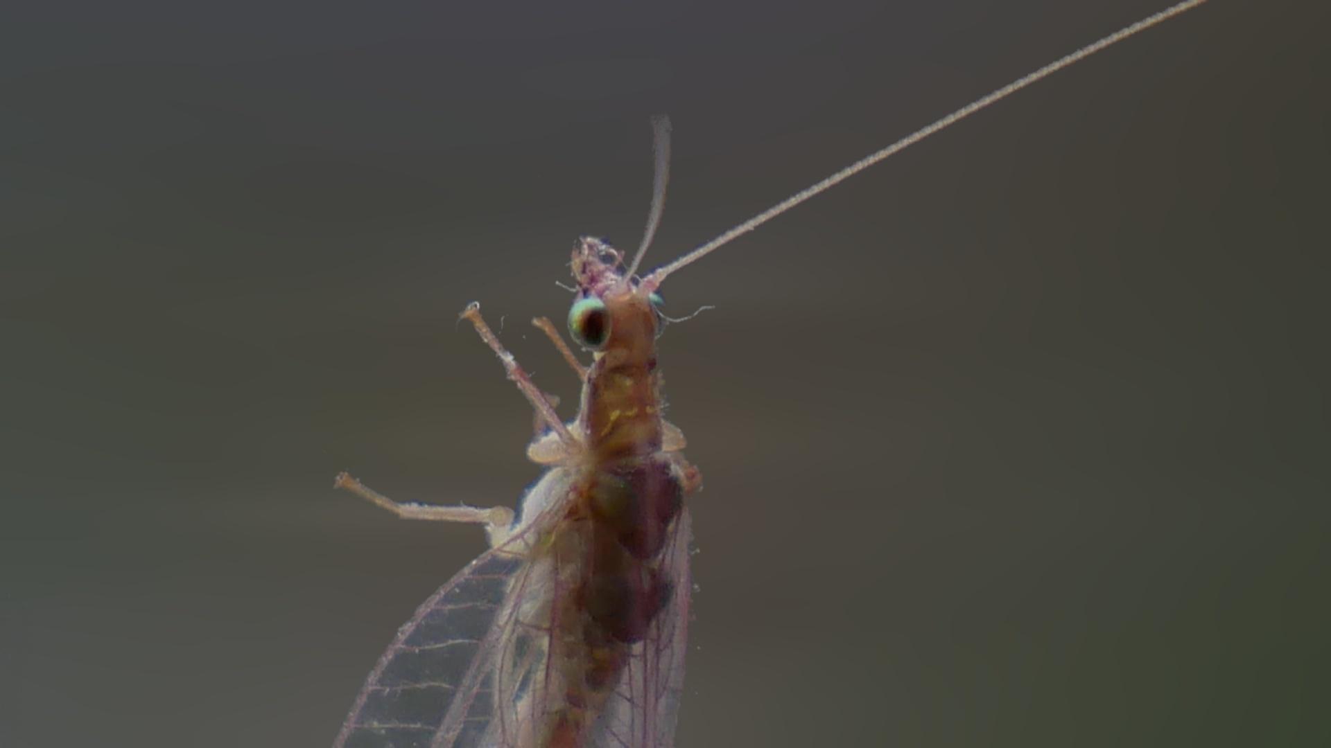 rovar kártevő parazita)
