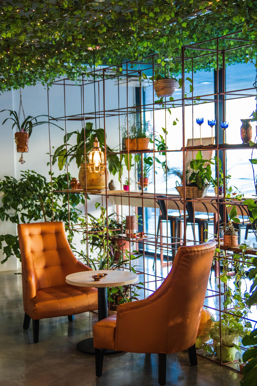 innenarchitektur zuhause pflanze baum mobel fenster tabelle aussenstruktur haus wohnzimmer freizeit sessel