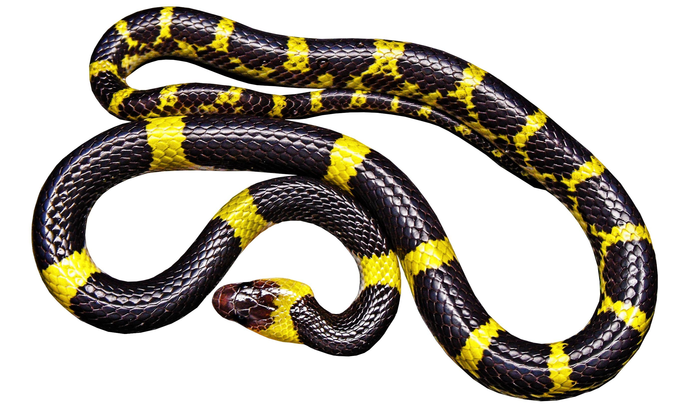 snake - HD2792×1661