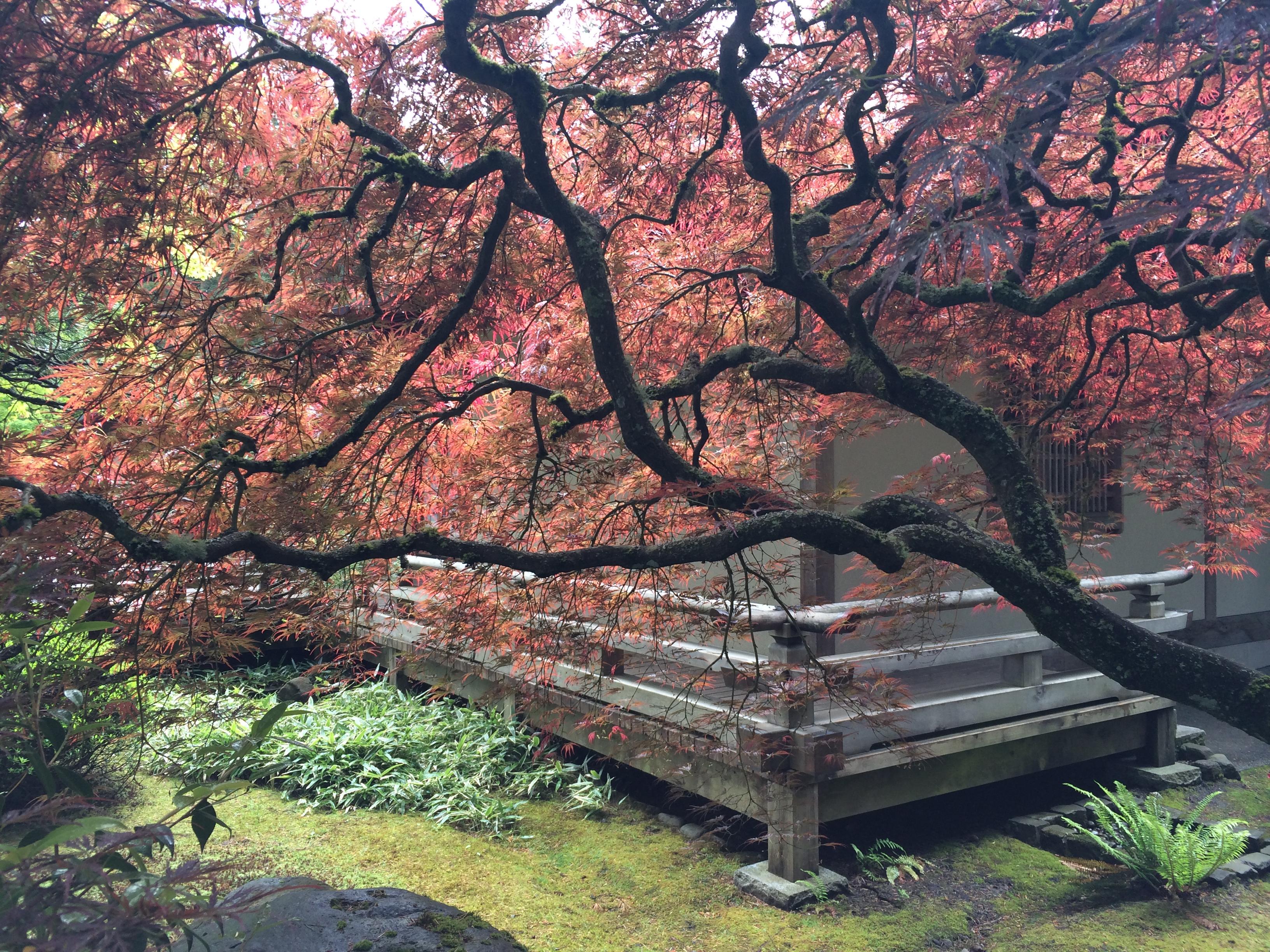 580+ Gambar Pemandangan Negara Jepang Terbaik