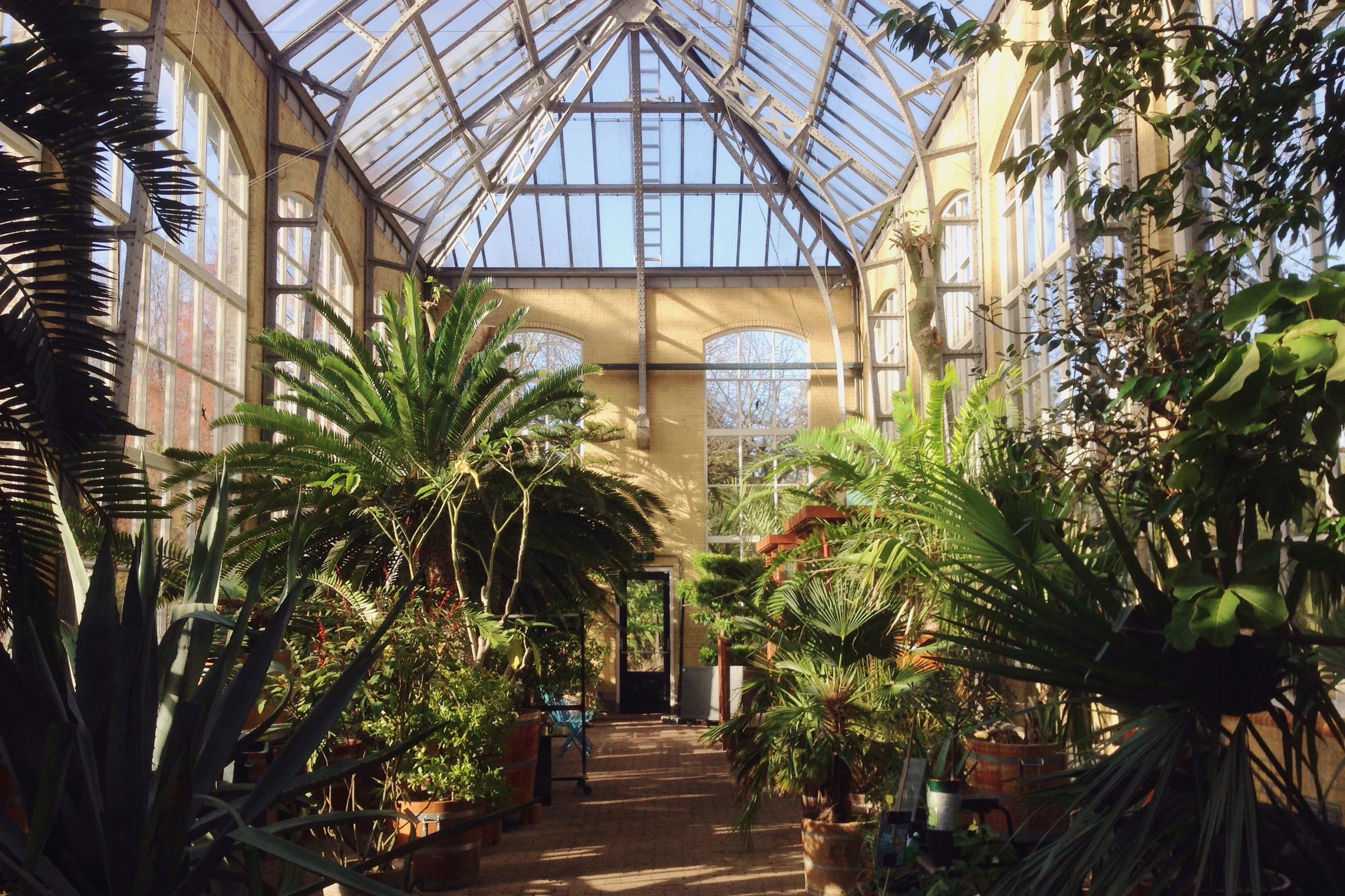 Fotos gratis : selva, propiedad, botánica, invernadero, recurso ...