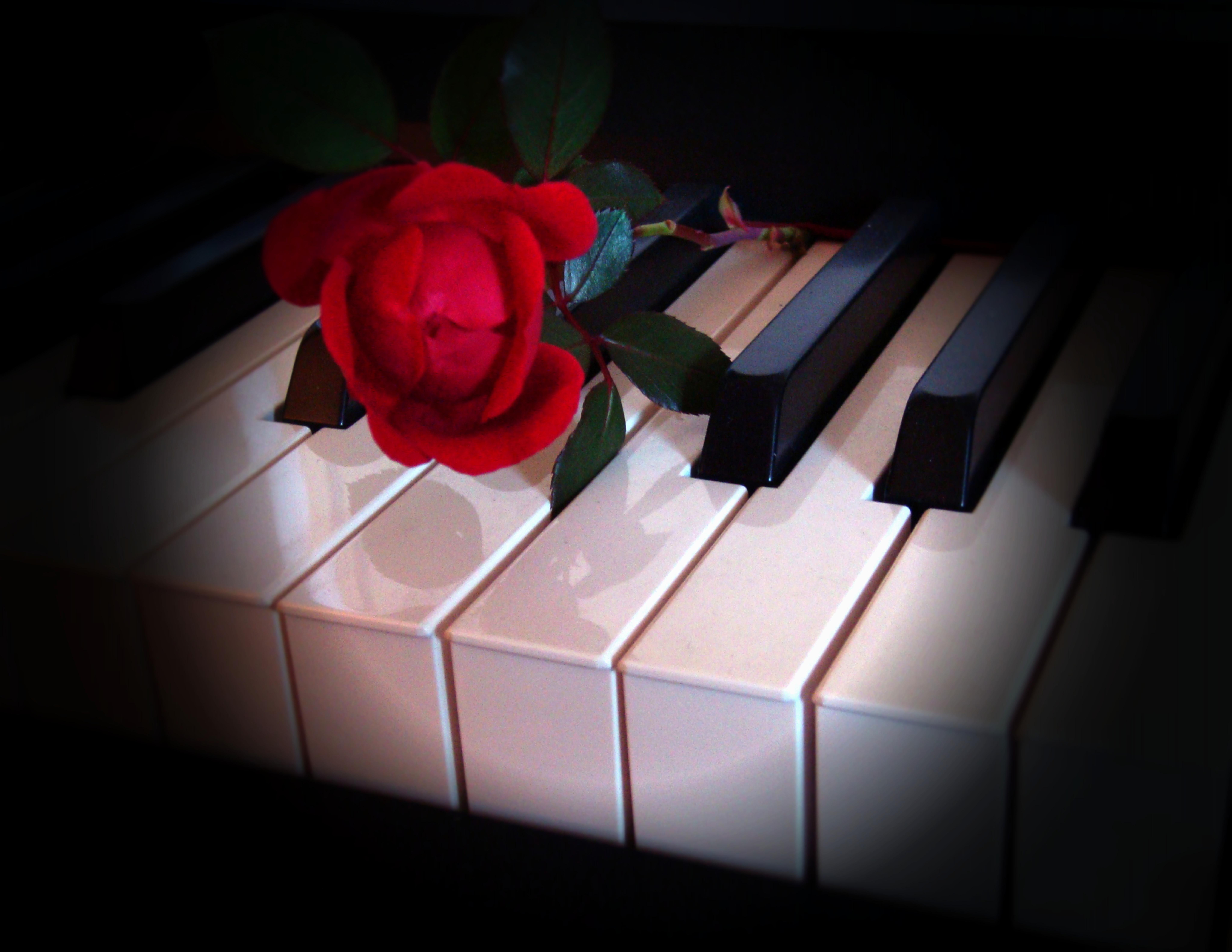 большая пися картинка роза и пианино имеет