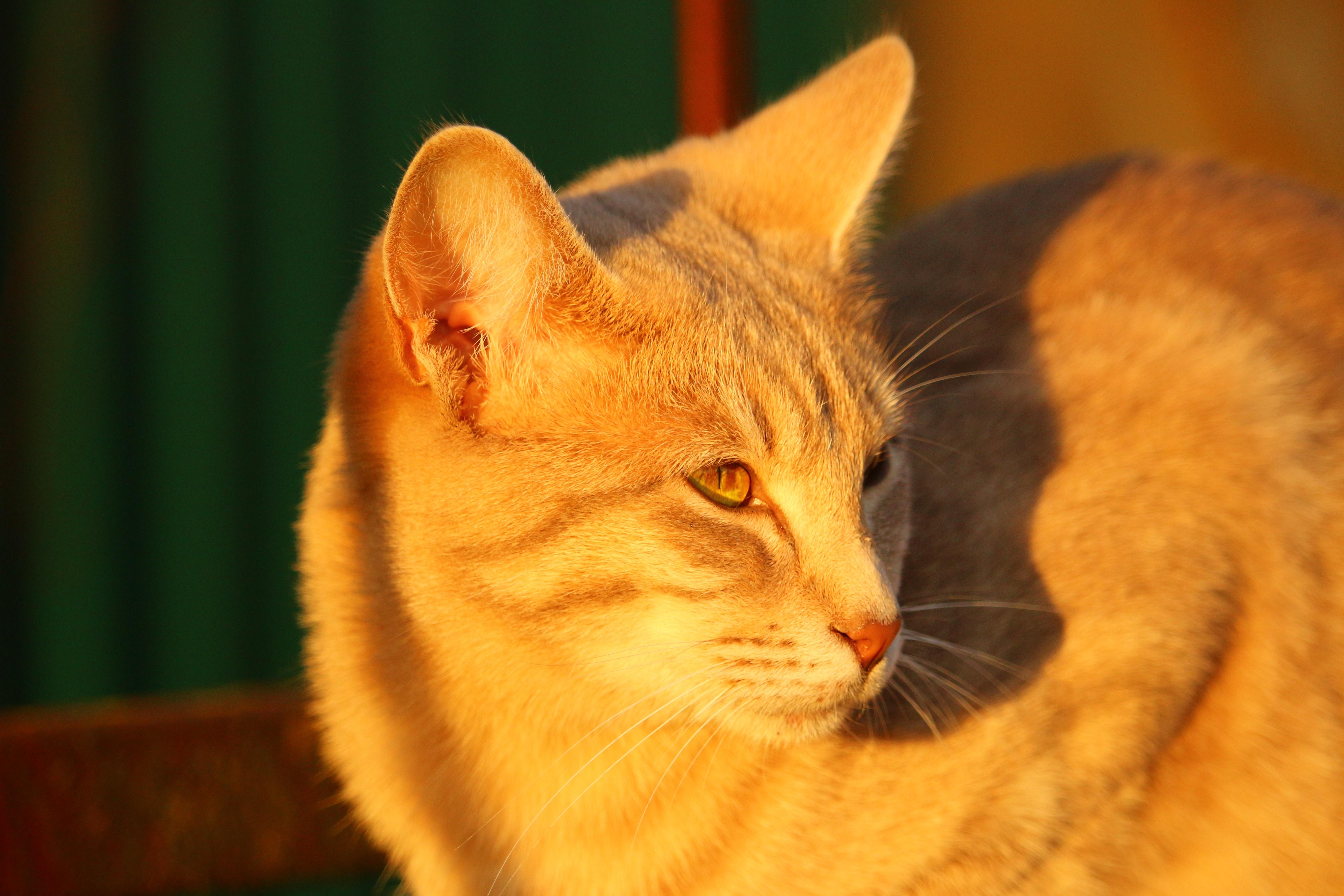 Fotos gratis : gatito, otoño, fauna, de cerca, nariz, bigotes ...