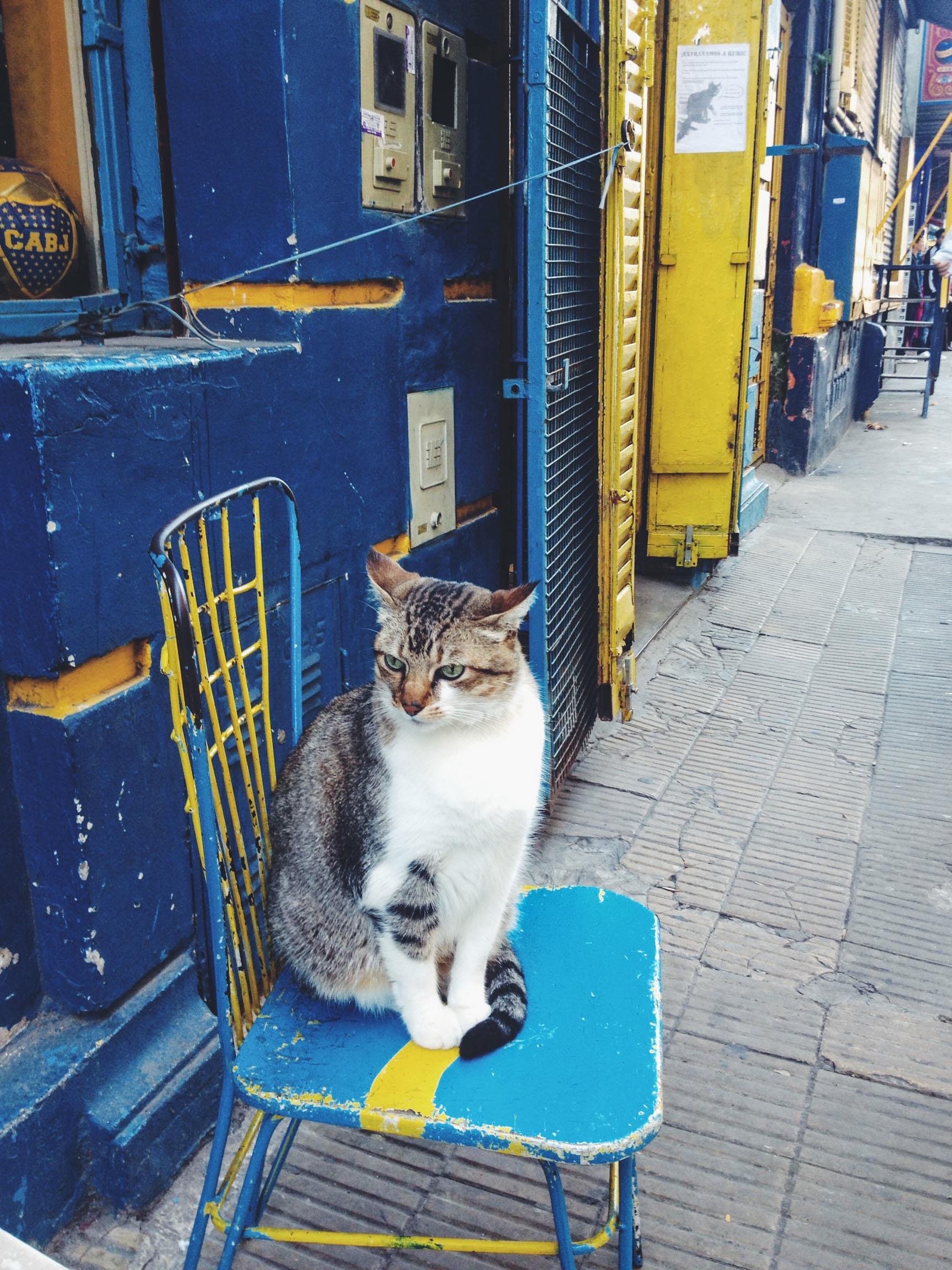 Fotos gratis : gatito, gato, color, azul, instantánea, refugio de ...