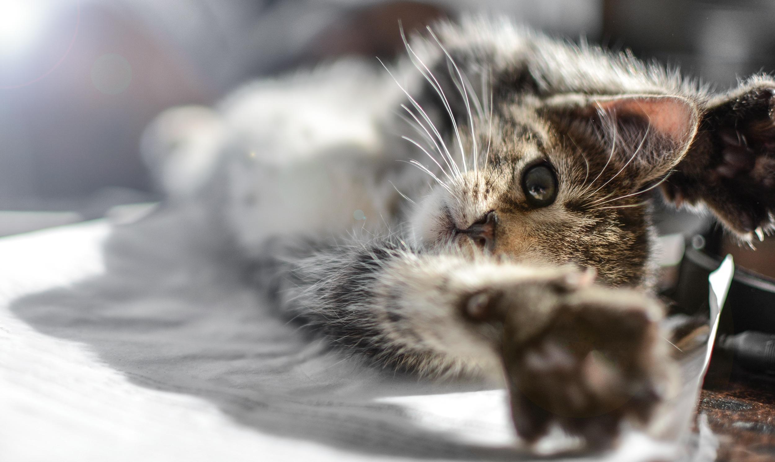 Malé roztomilé mačička pics