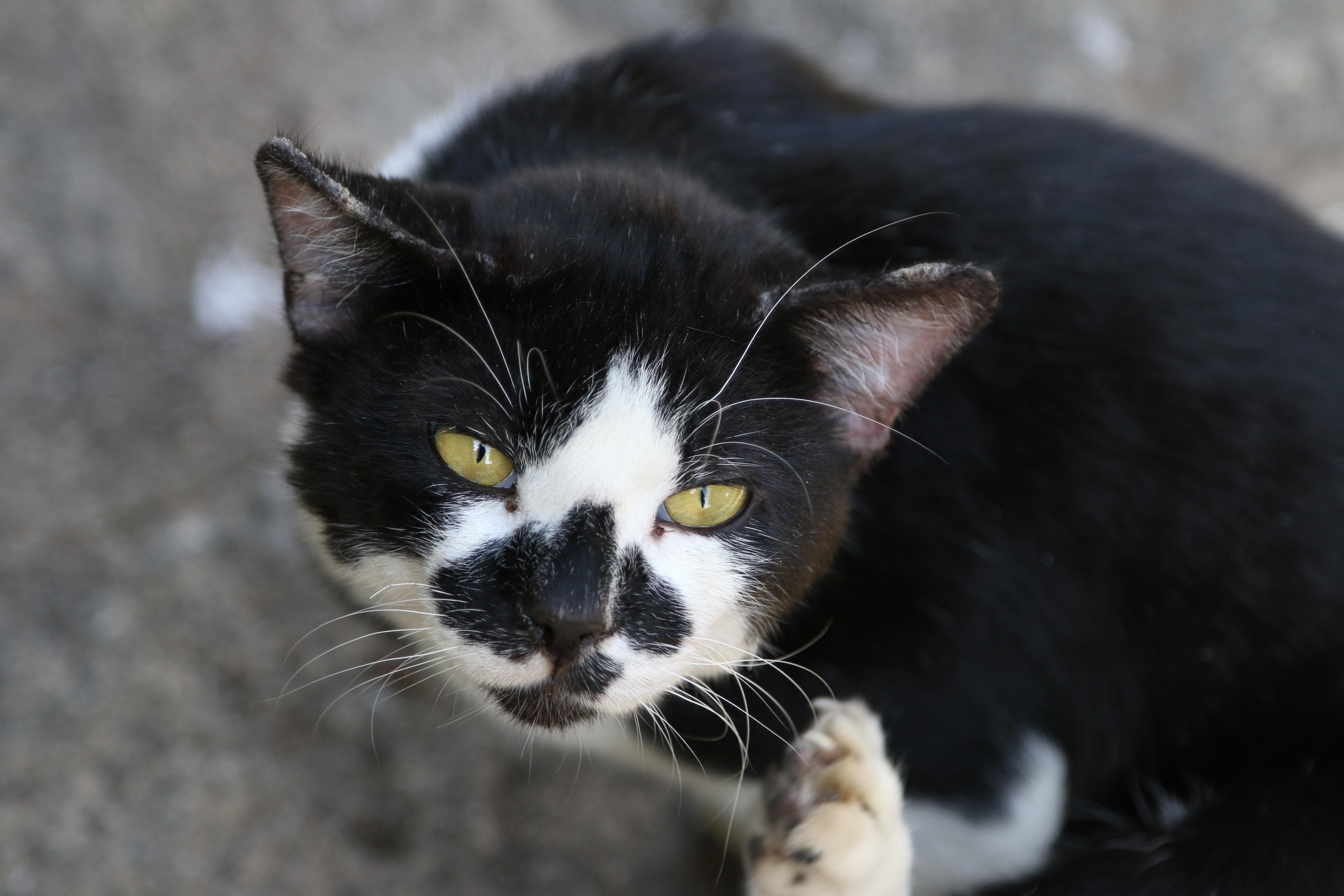 Čierna mačička 4 u