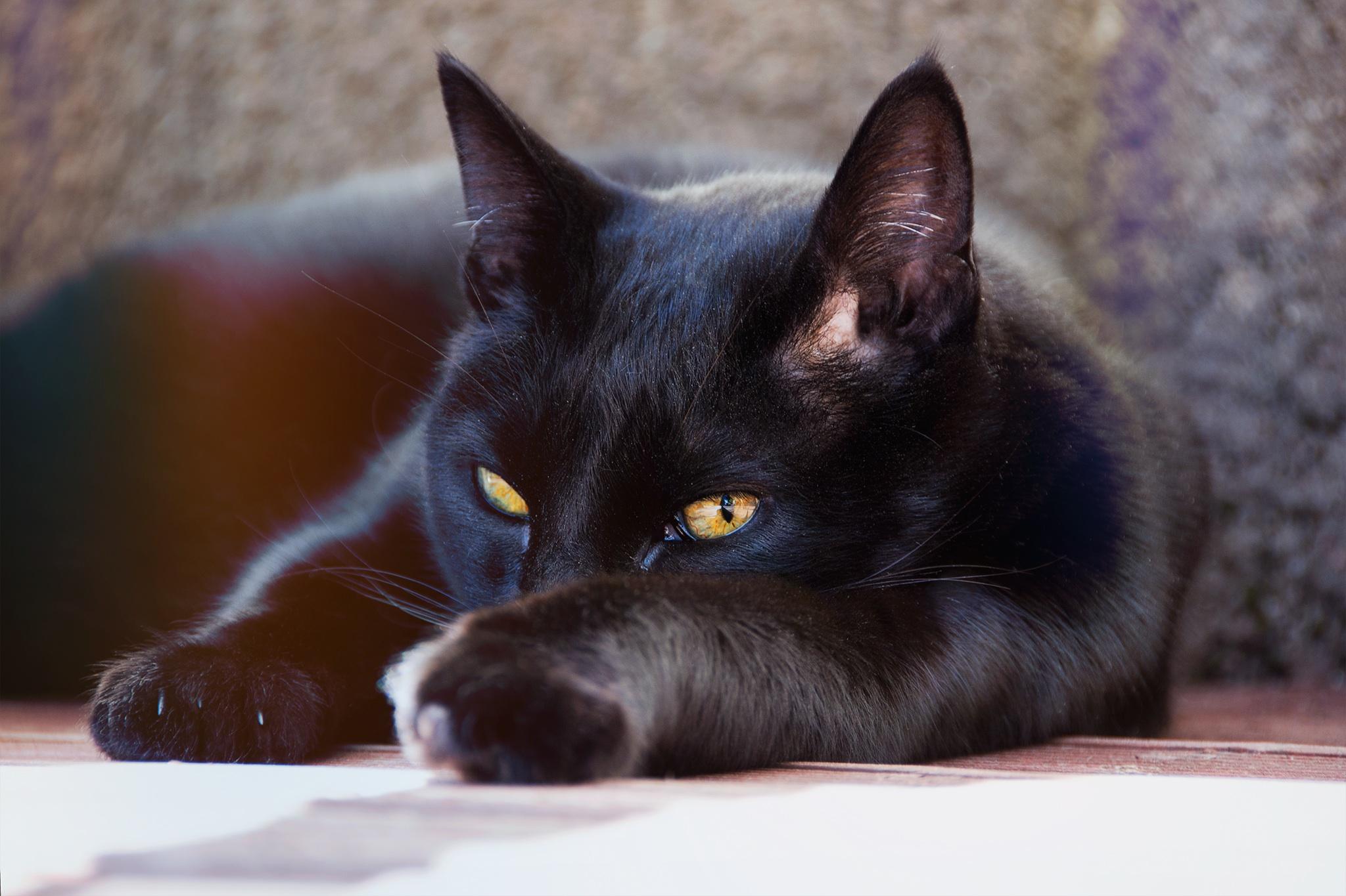 молитвы черные кошки животные фото том, что