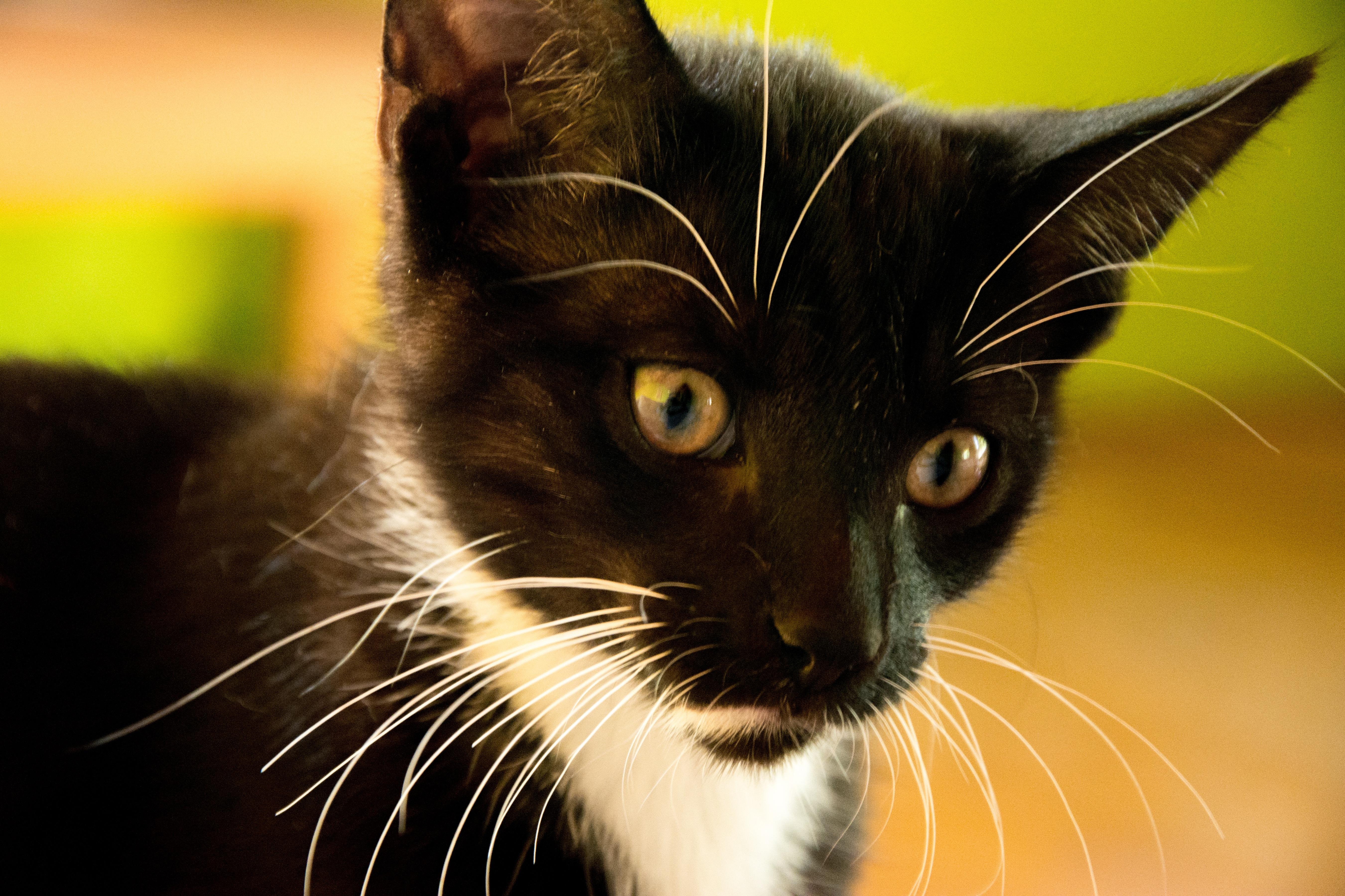 Gato Blanco Y Negro. Awesome Fotos De Gatos En Blanco Y