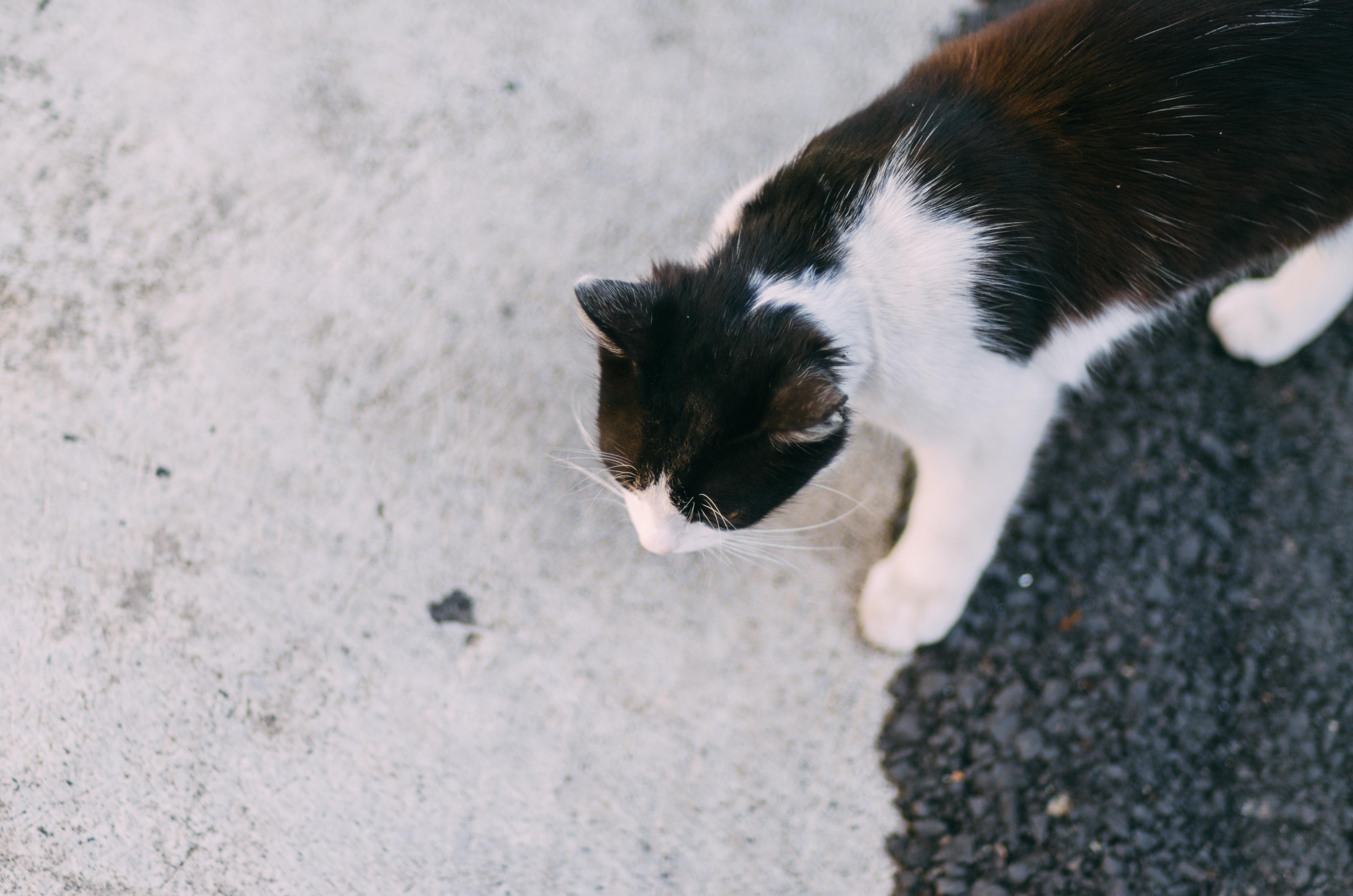 Veľké čierne mokré mačička pics