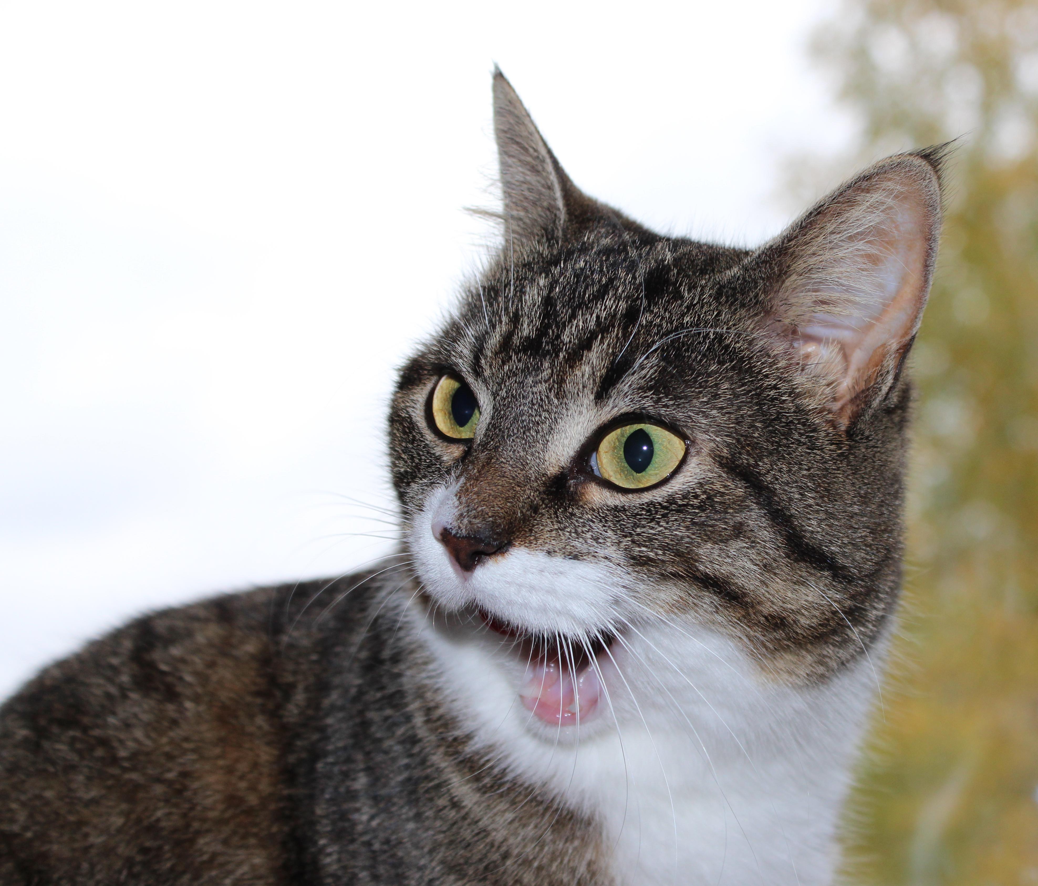 котенок удивлен фото объективы камеры попали