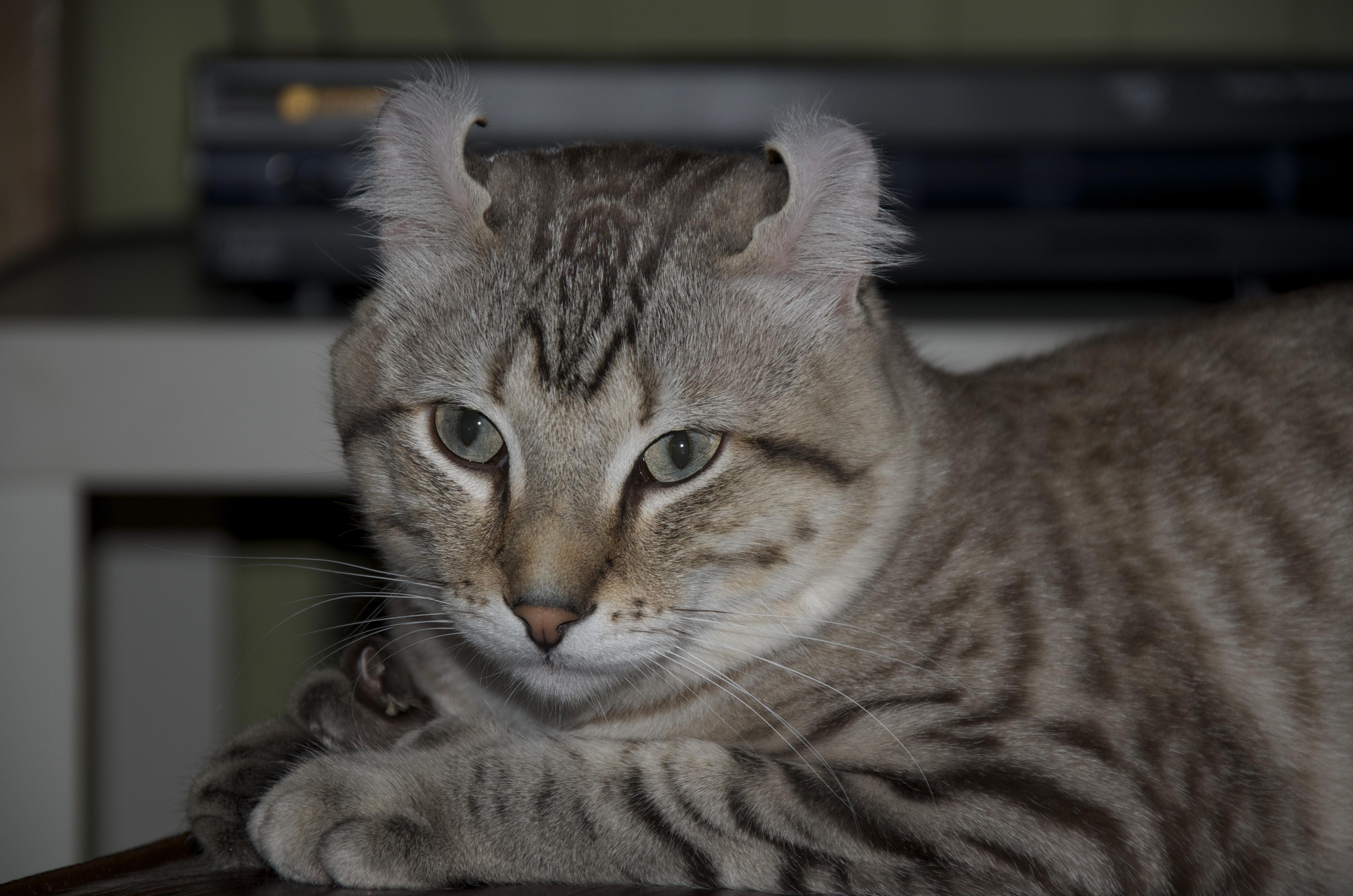 Kediler ve kediler i&#231