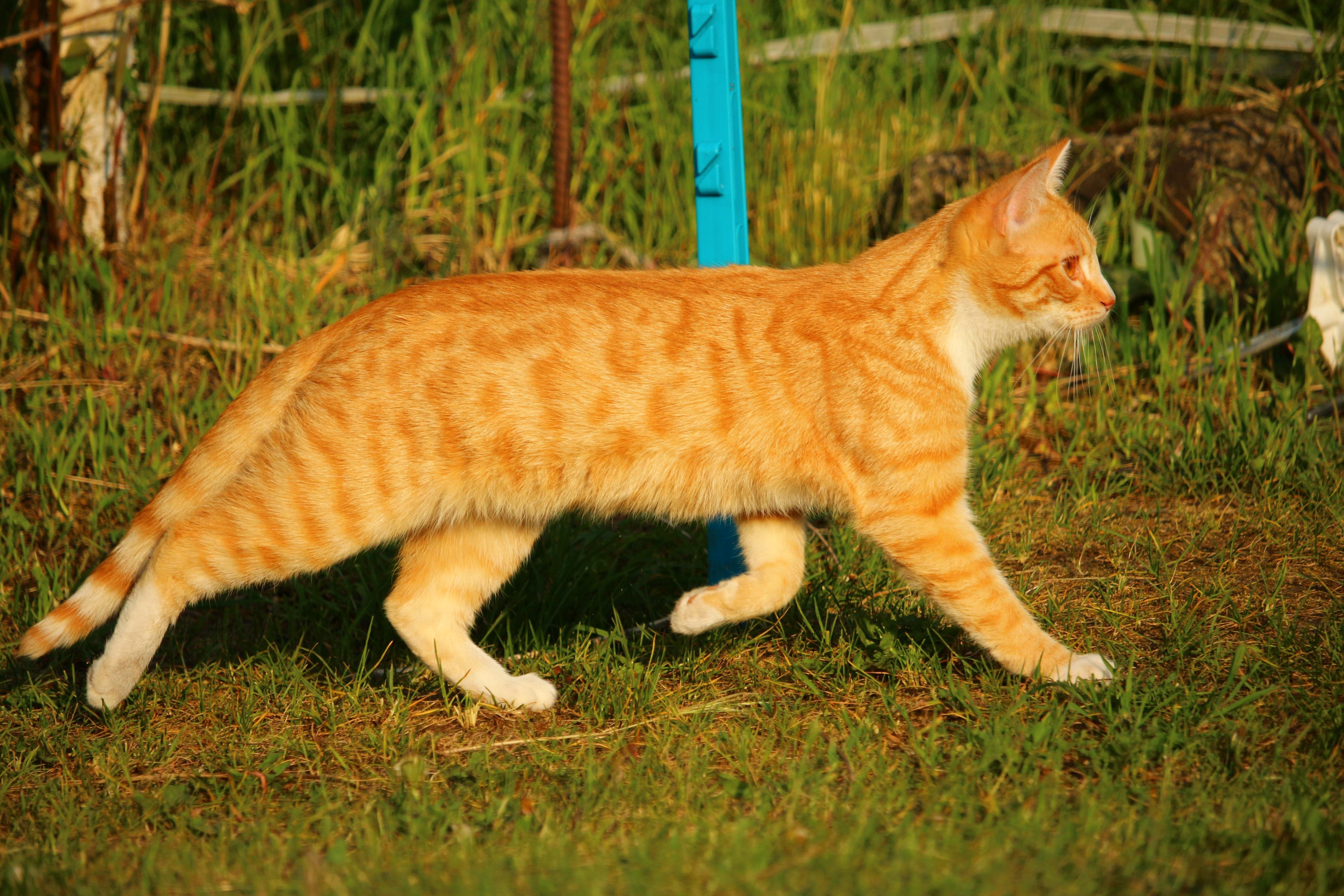Free Images Kitten Fauna Whiskers Savannah Vertebrate Mieze