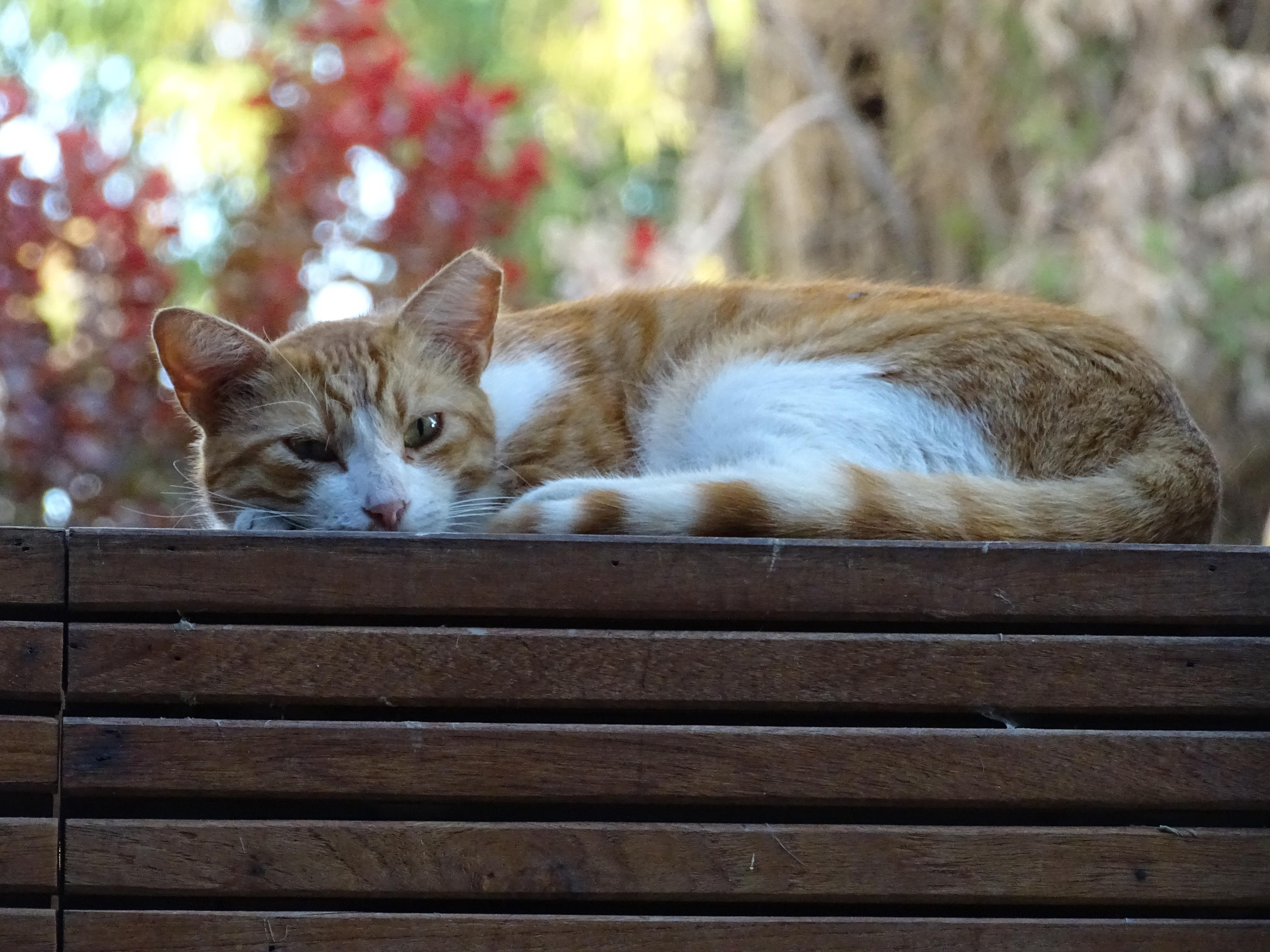 zdarma velké kočičky