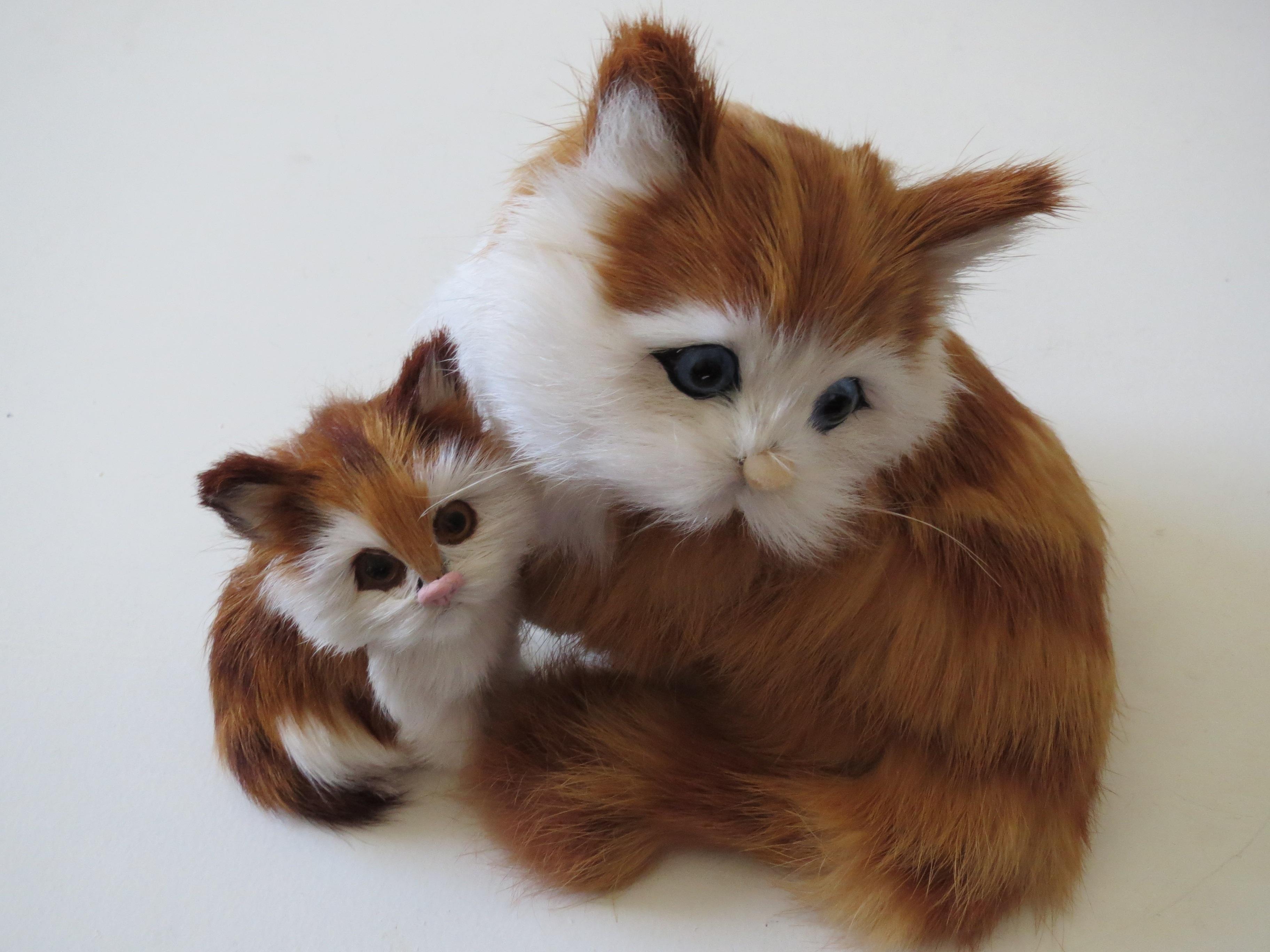 ocelot kittens for sale