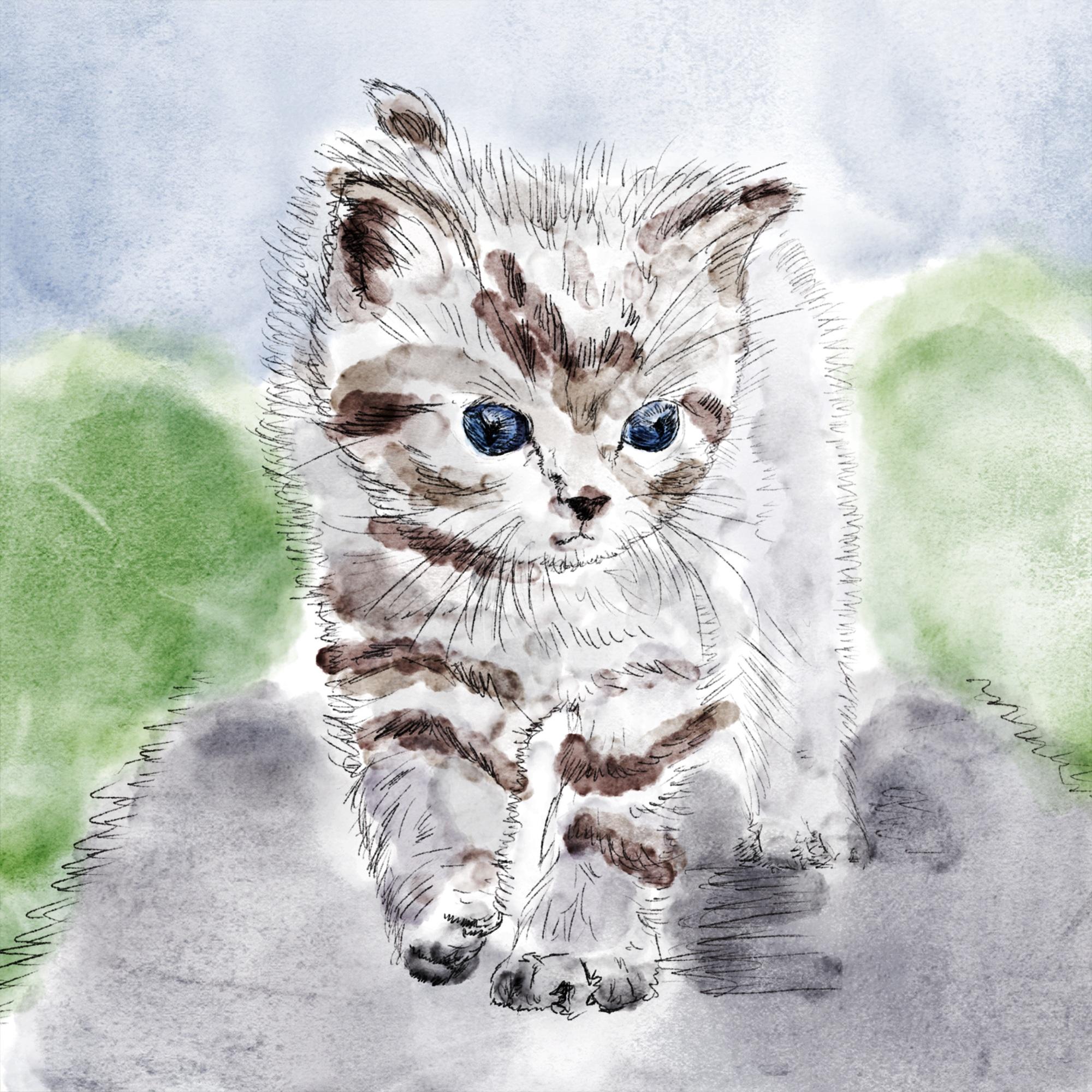 Gambar Anak Kucing Binatang Menyusui Cat Air Cambang